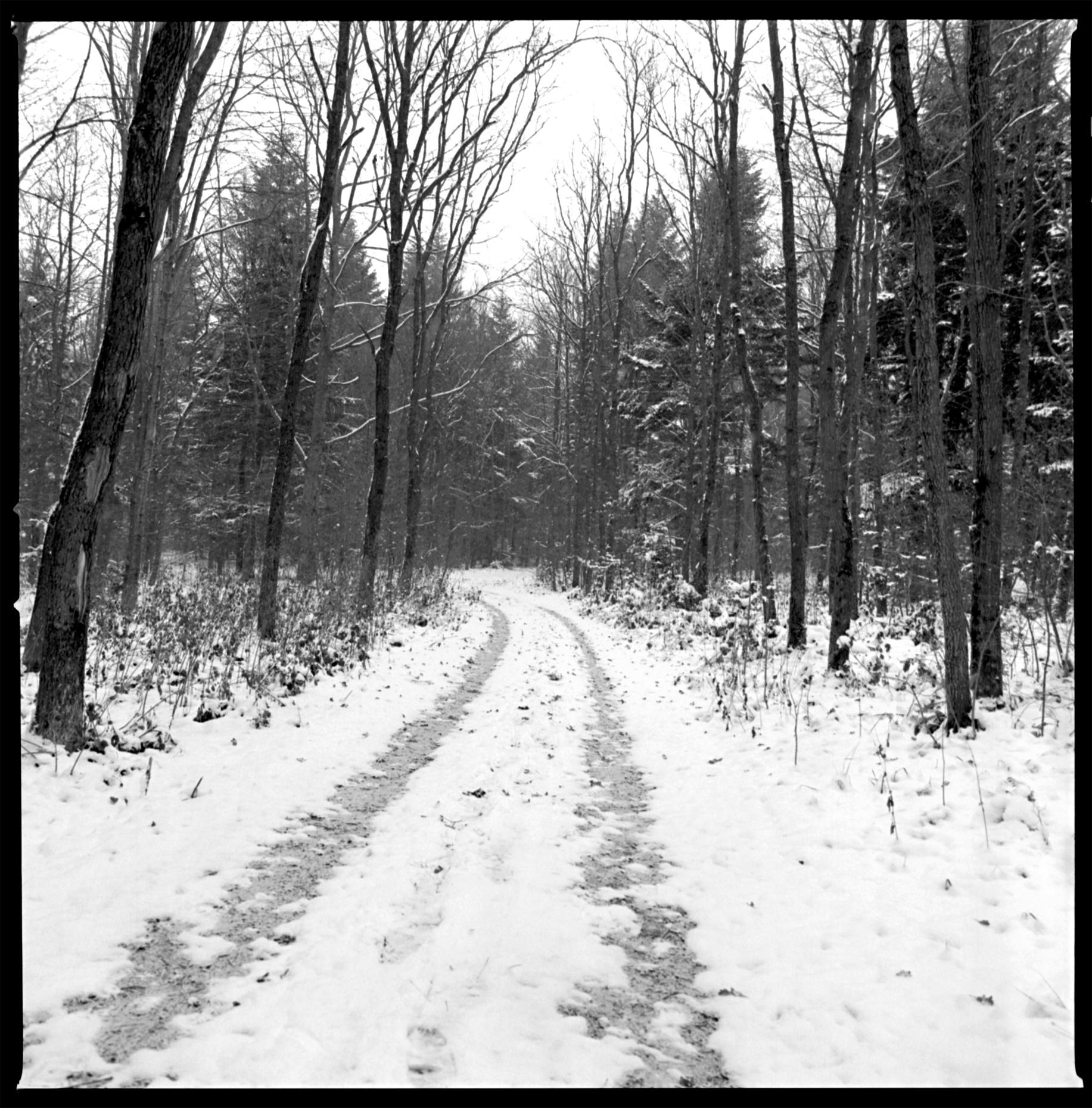 Bronitsia Forest  Ukraine, 2005