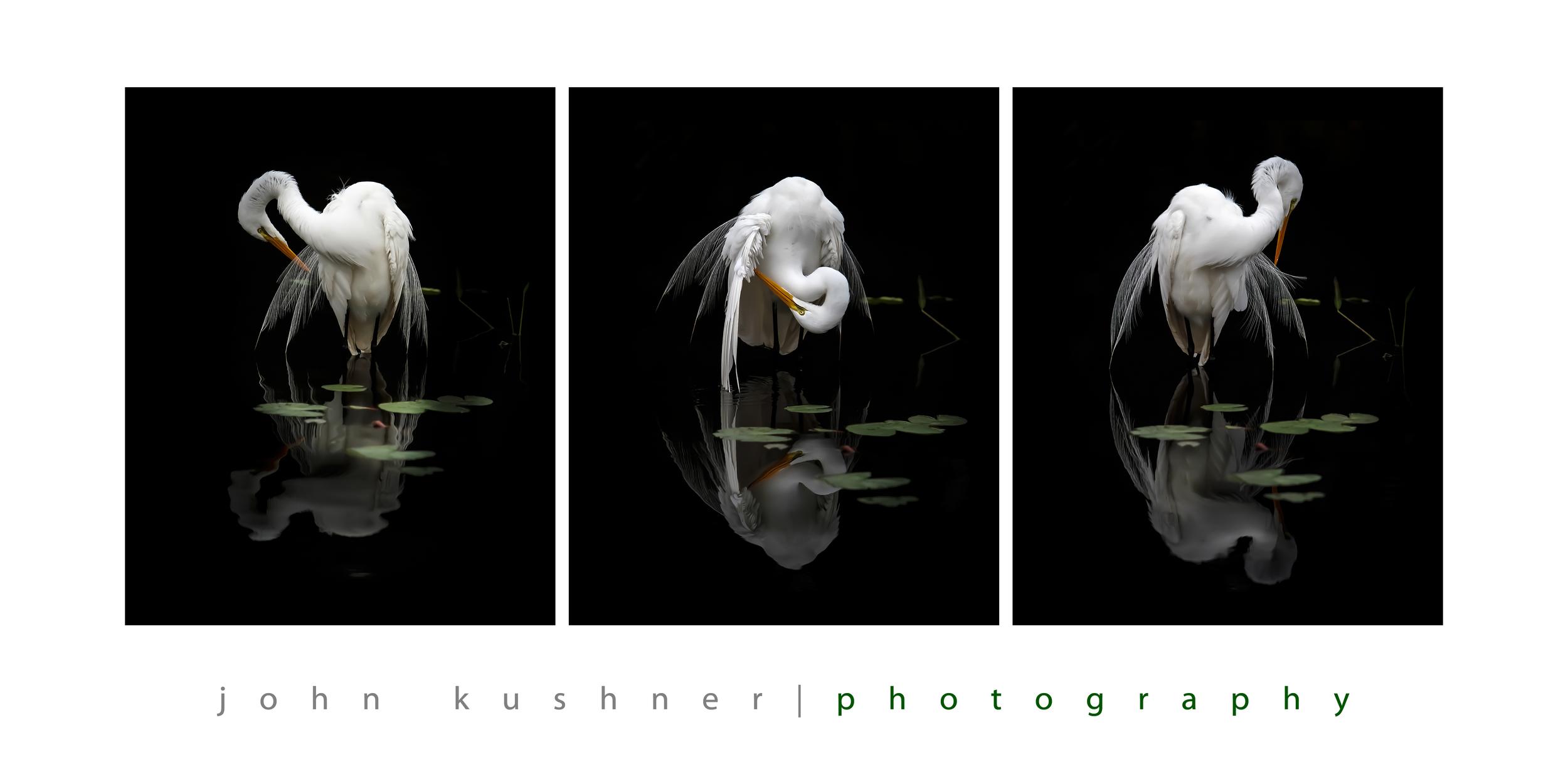 Bird Triptych 10x20 print wtext.jpg
