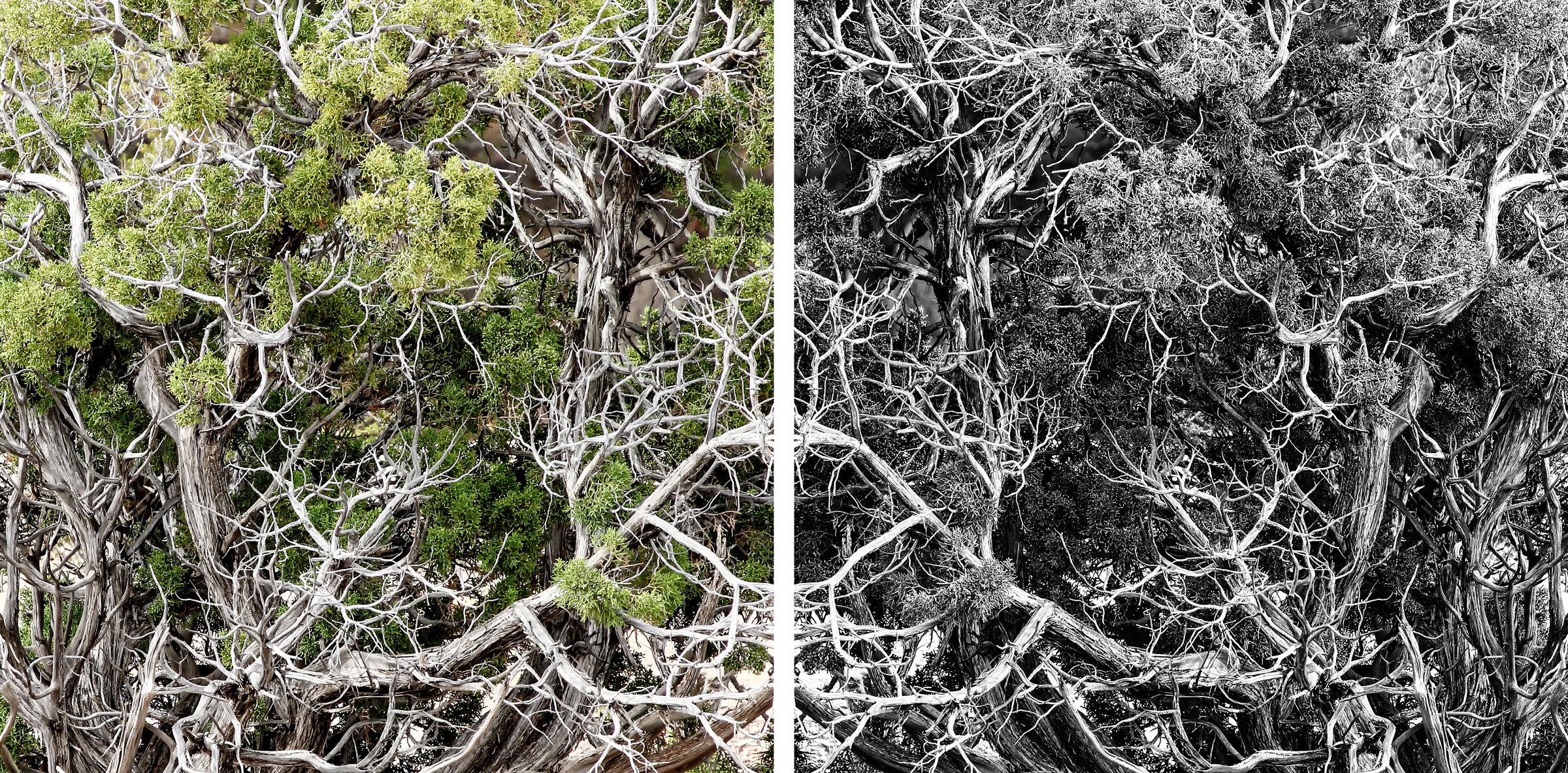 Tree Diptych wlayers framed.jpg