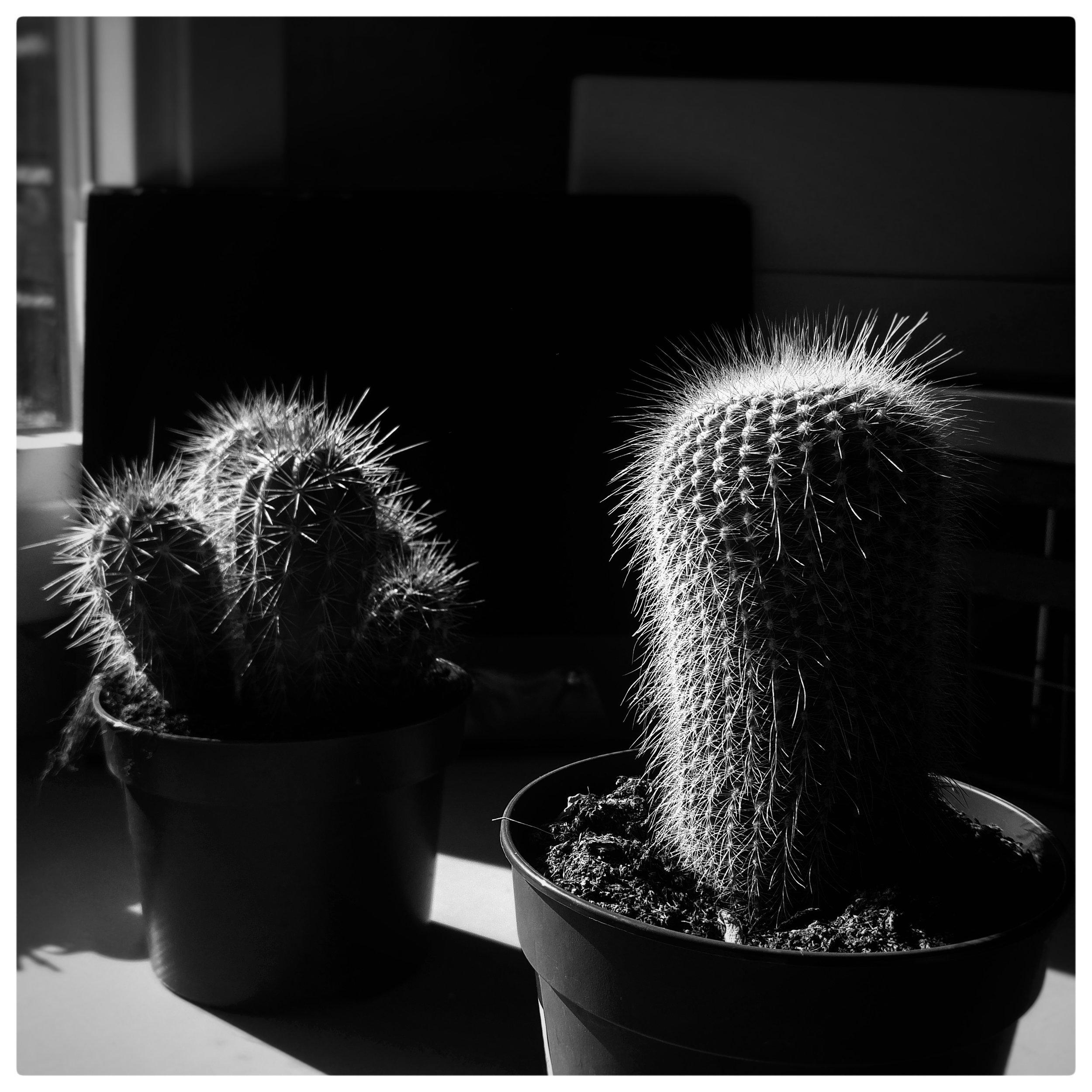 September 27 - Day 271: Prickly Pair