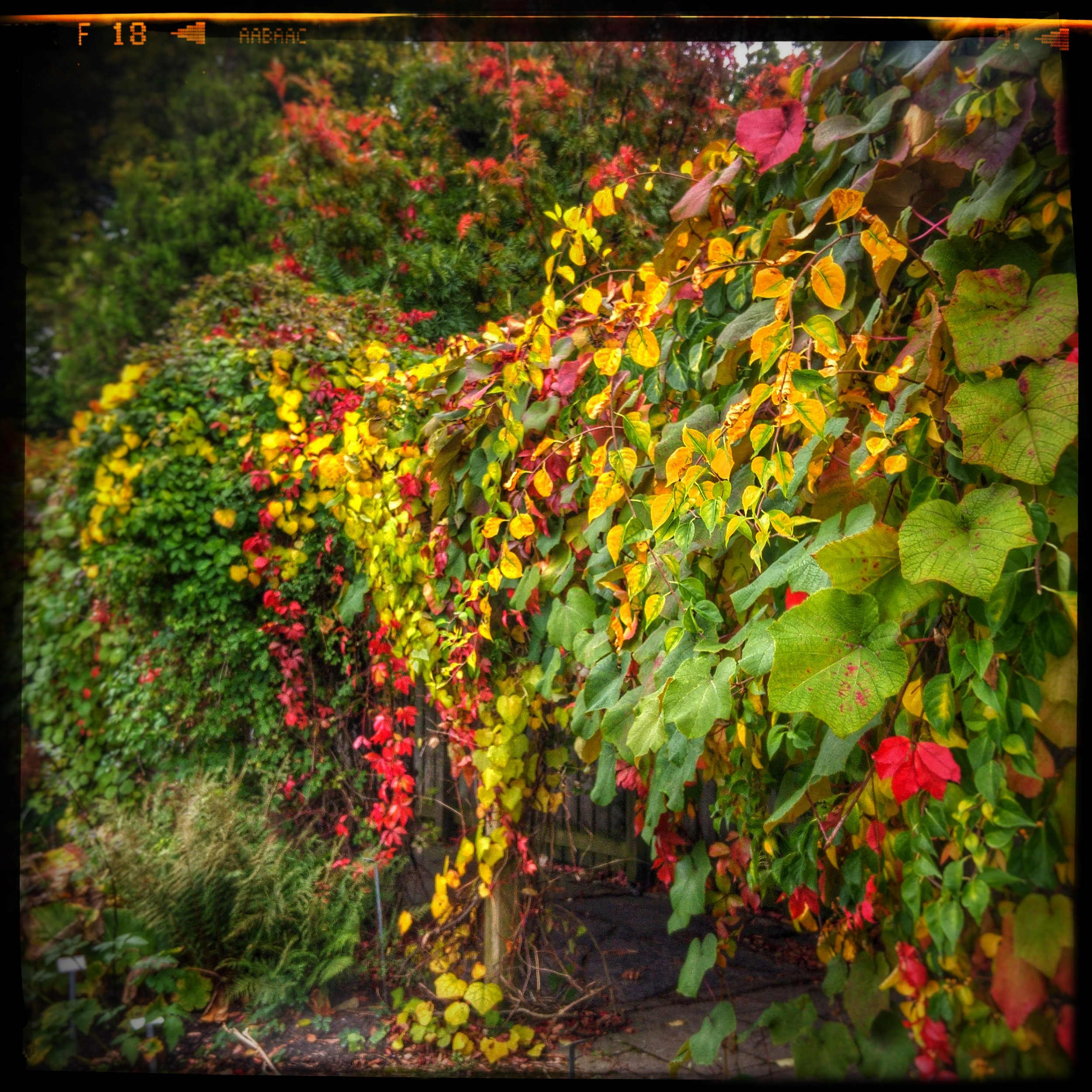 October 12 - Day 286: Fall Color Explosion