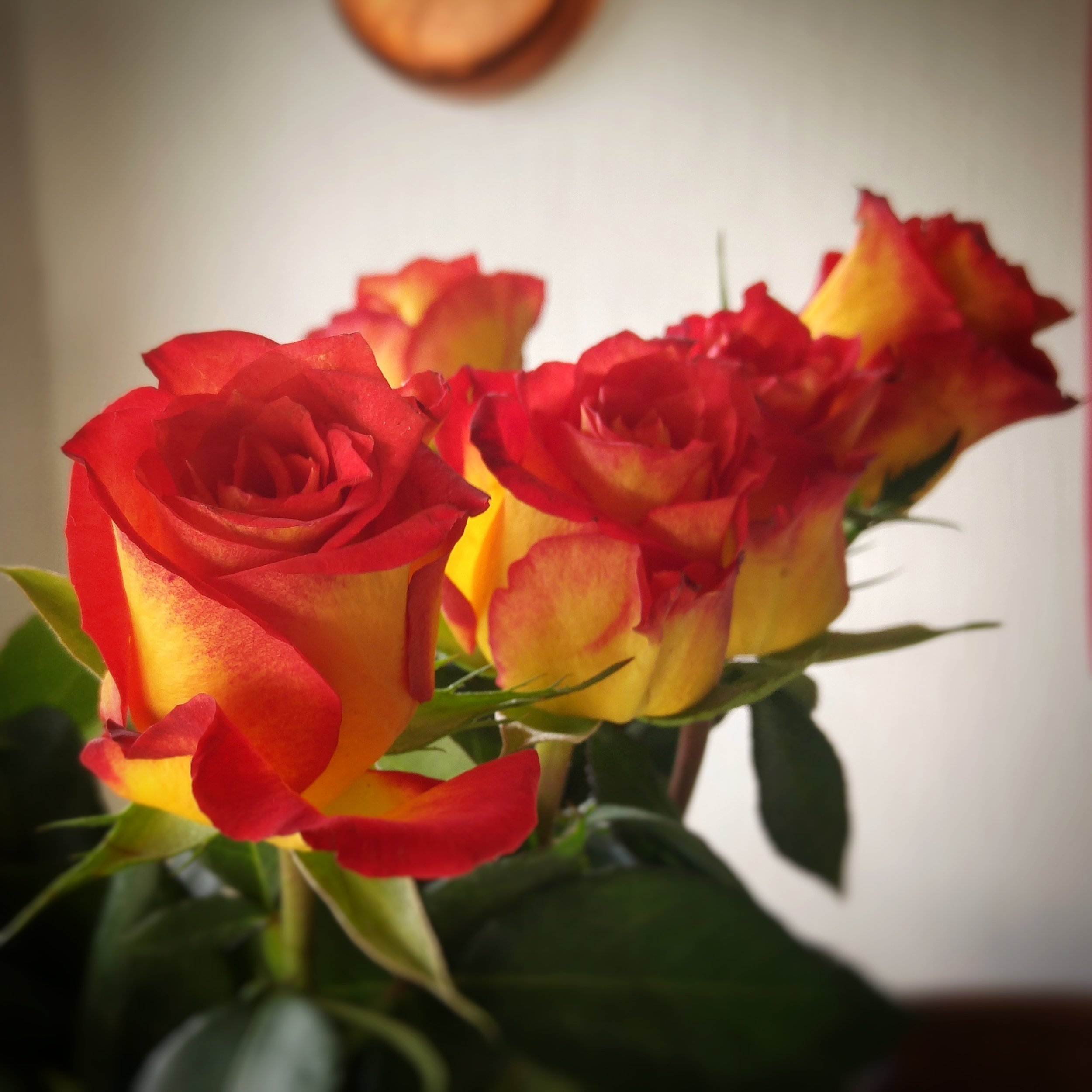 October 14 -  Day 288: Roses on Dad's birthday