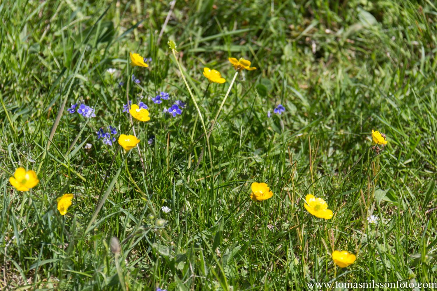 Yellow and blue...clearly it's a Swedish meadow! ;-)