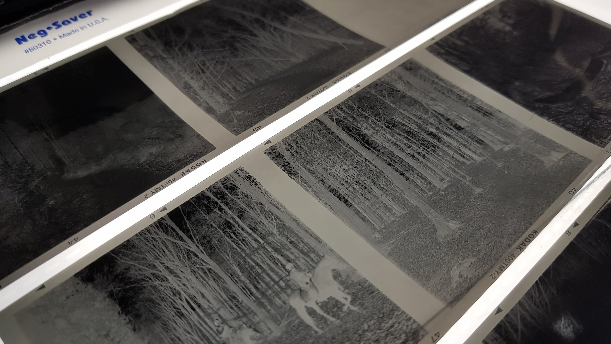 My negatives on the light table