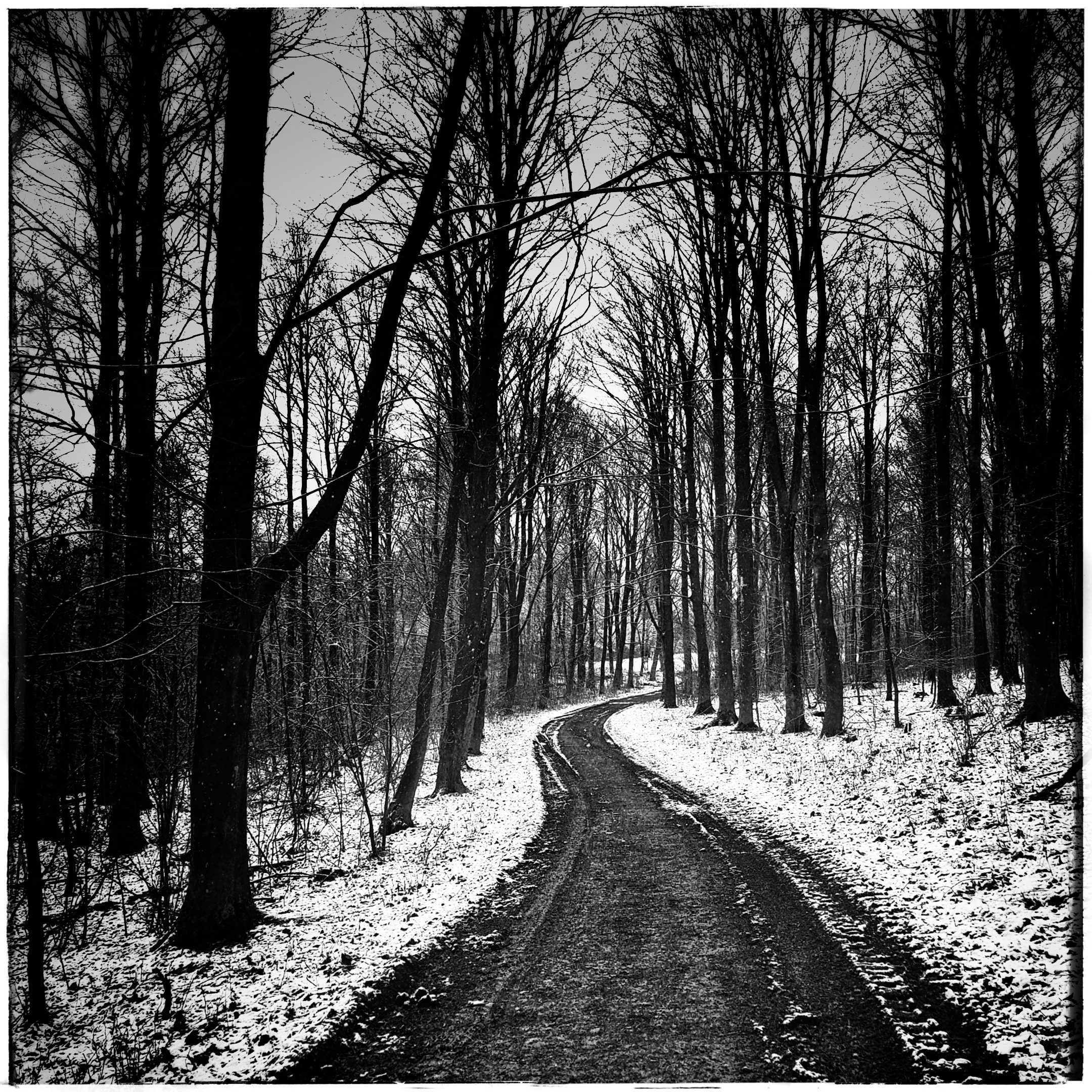 Day 37 - February 6: Long and winding road