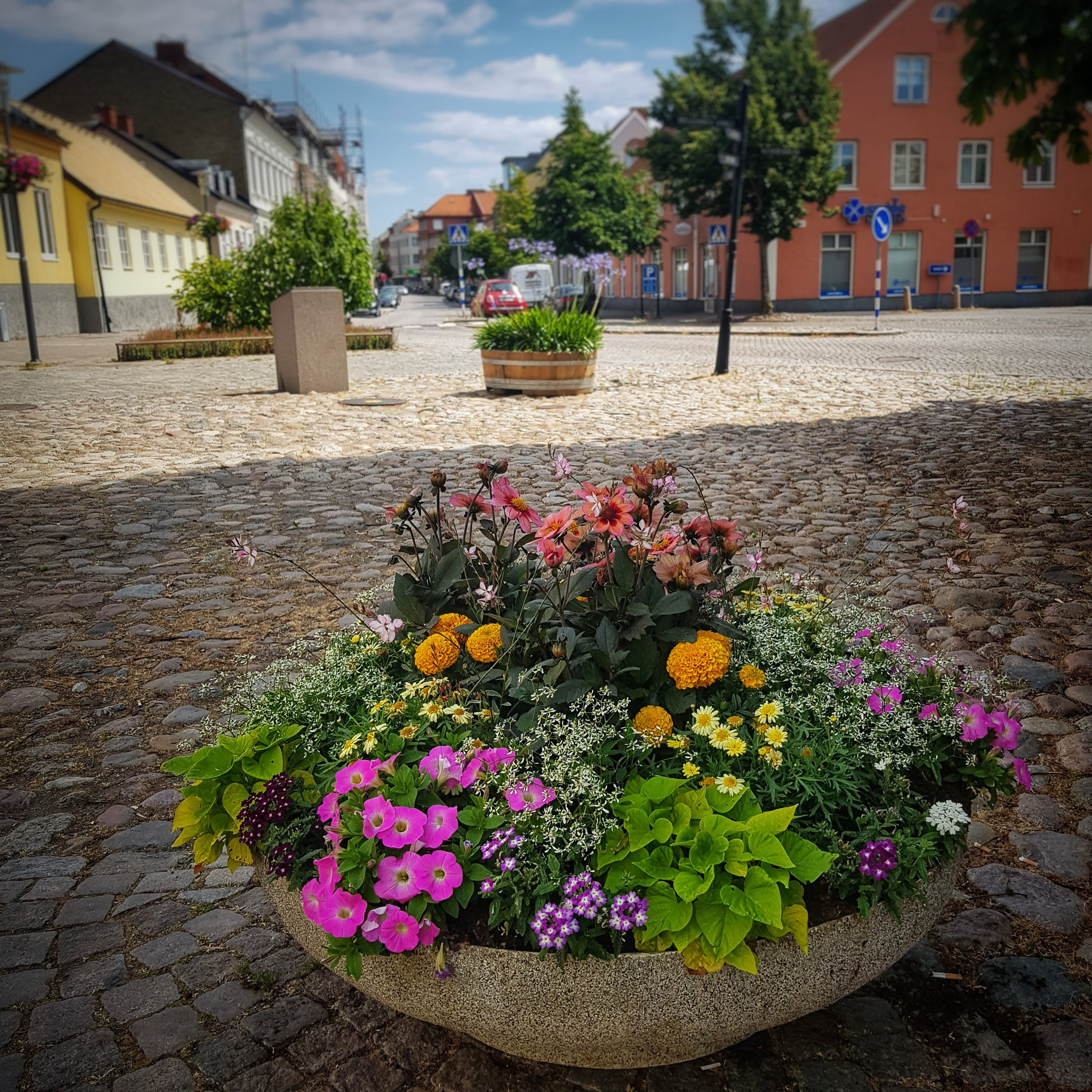Day 188 - July 07: Flowers in a small town