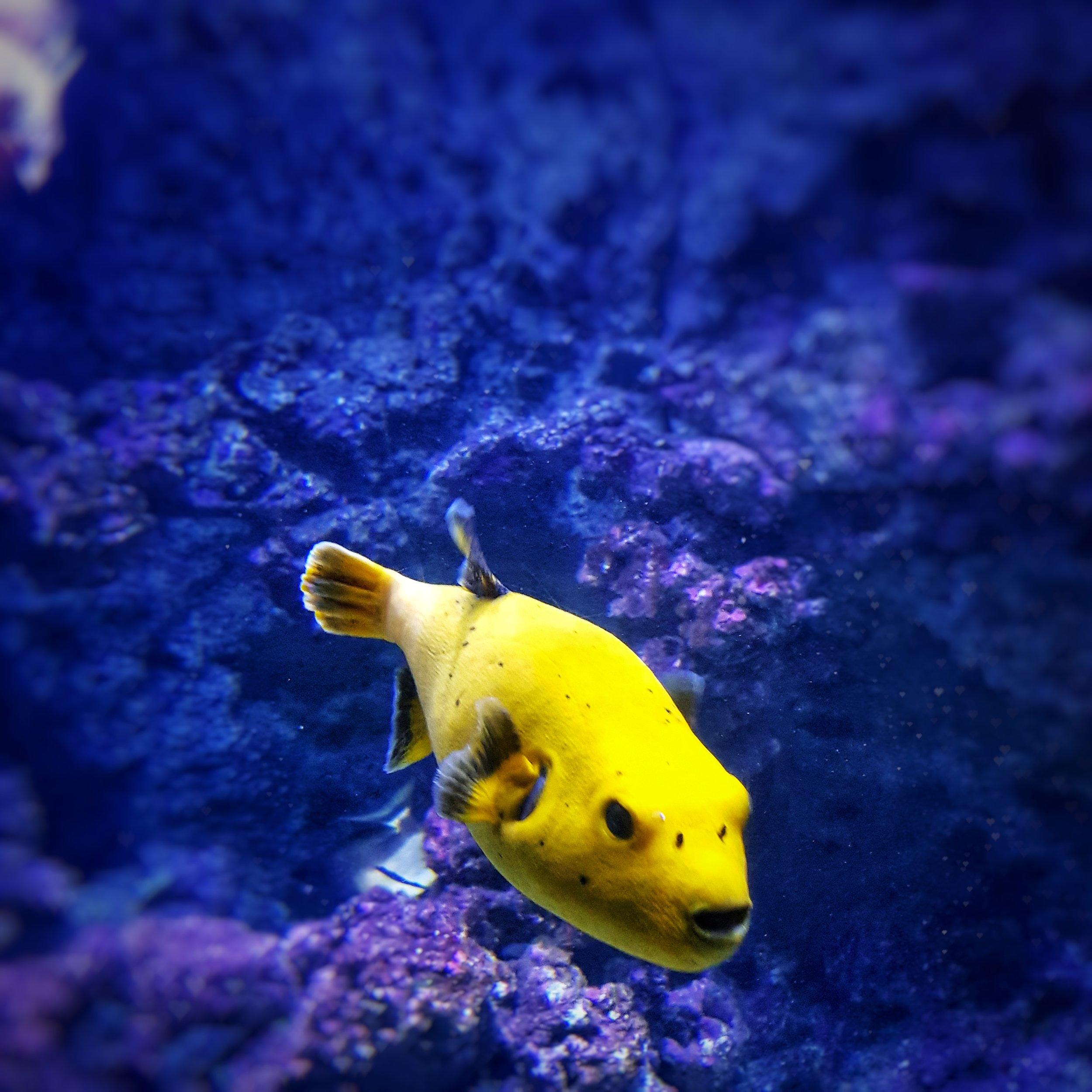 Day 202 - July 21: At the Aquarium