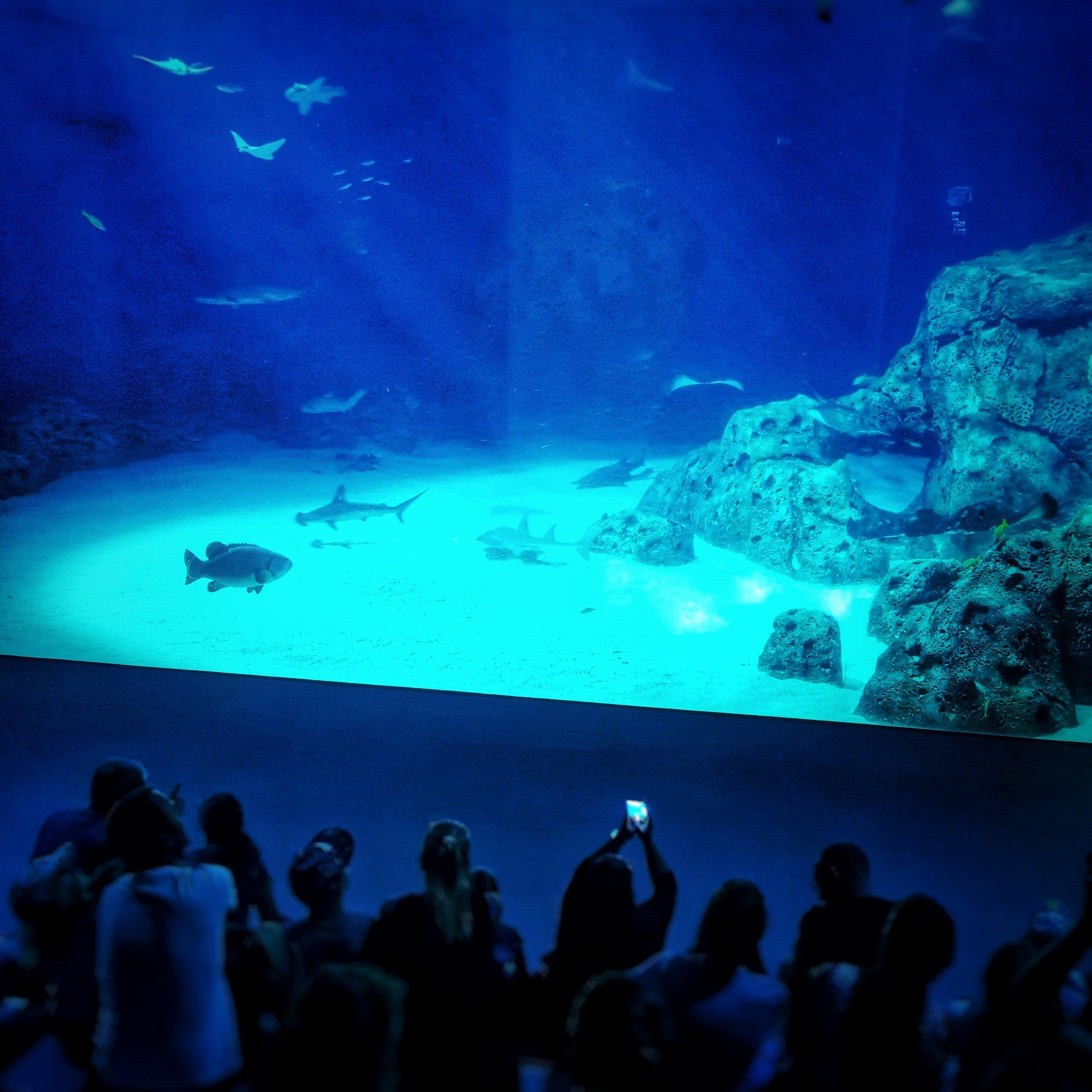Day 221 - August 9: Ocean blue