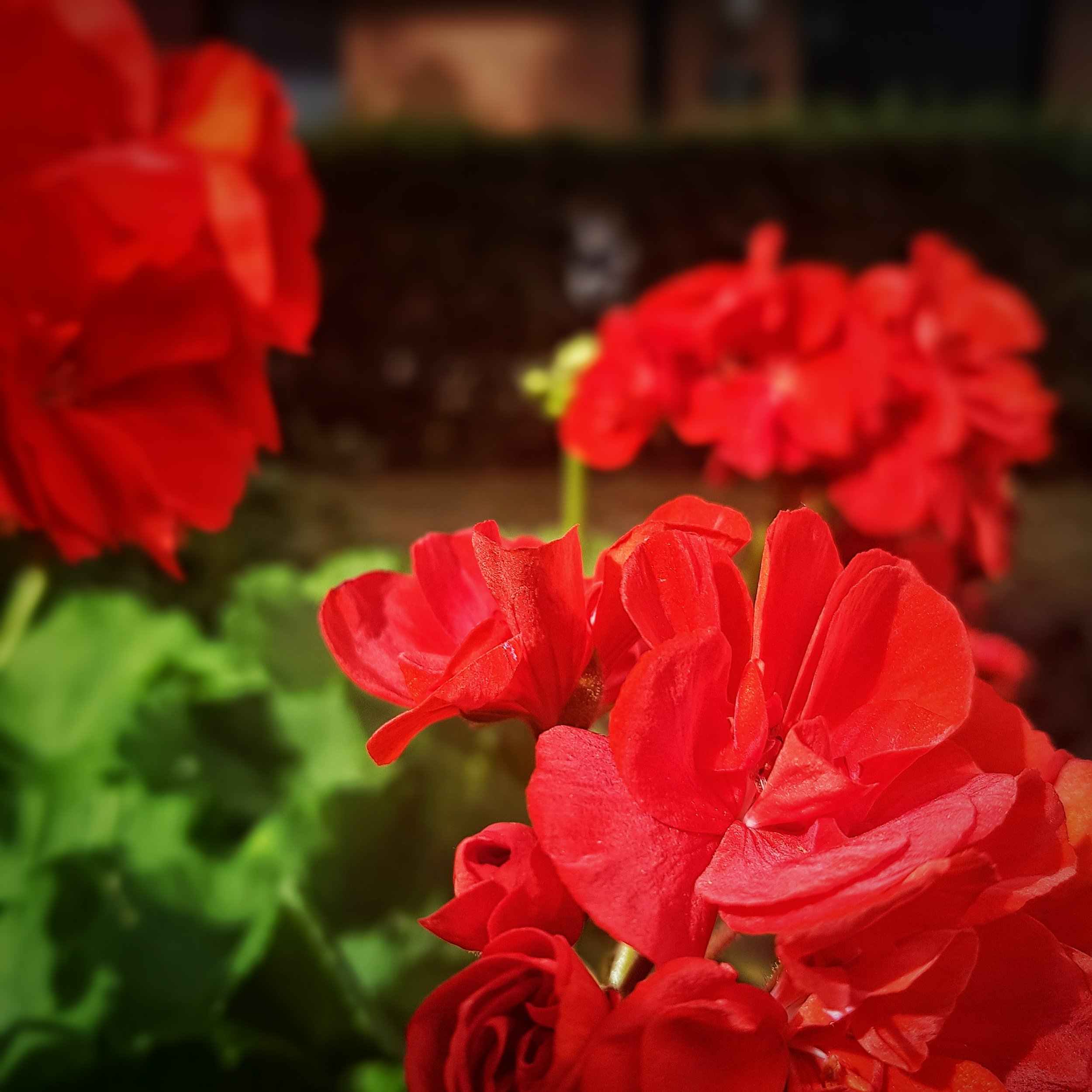 Day 225 - August 13: Red & Green