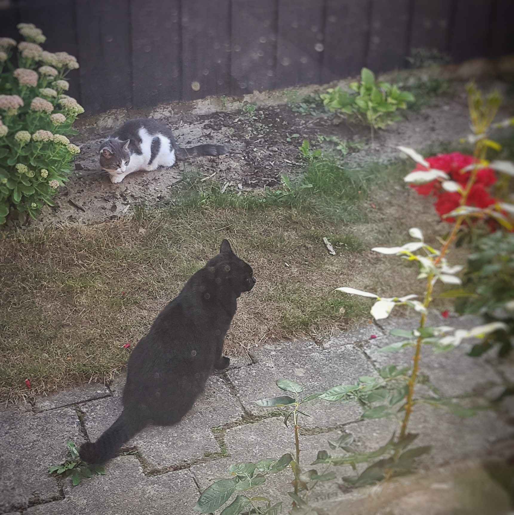 Day 235 - August 23: Imminent catfight