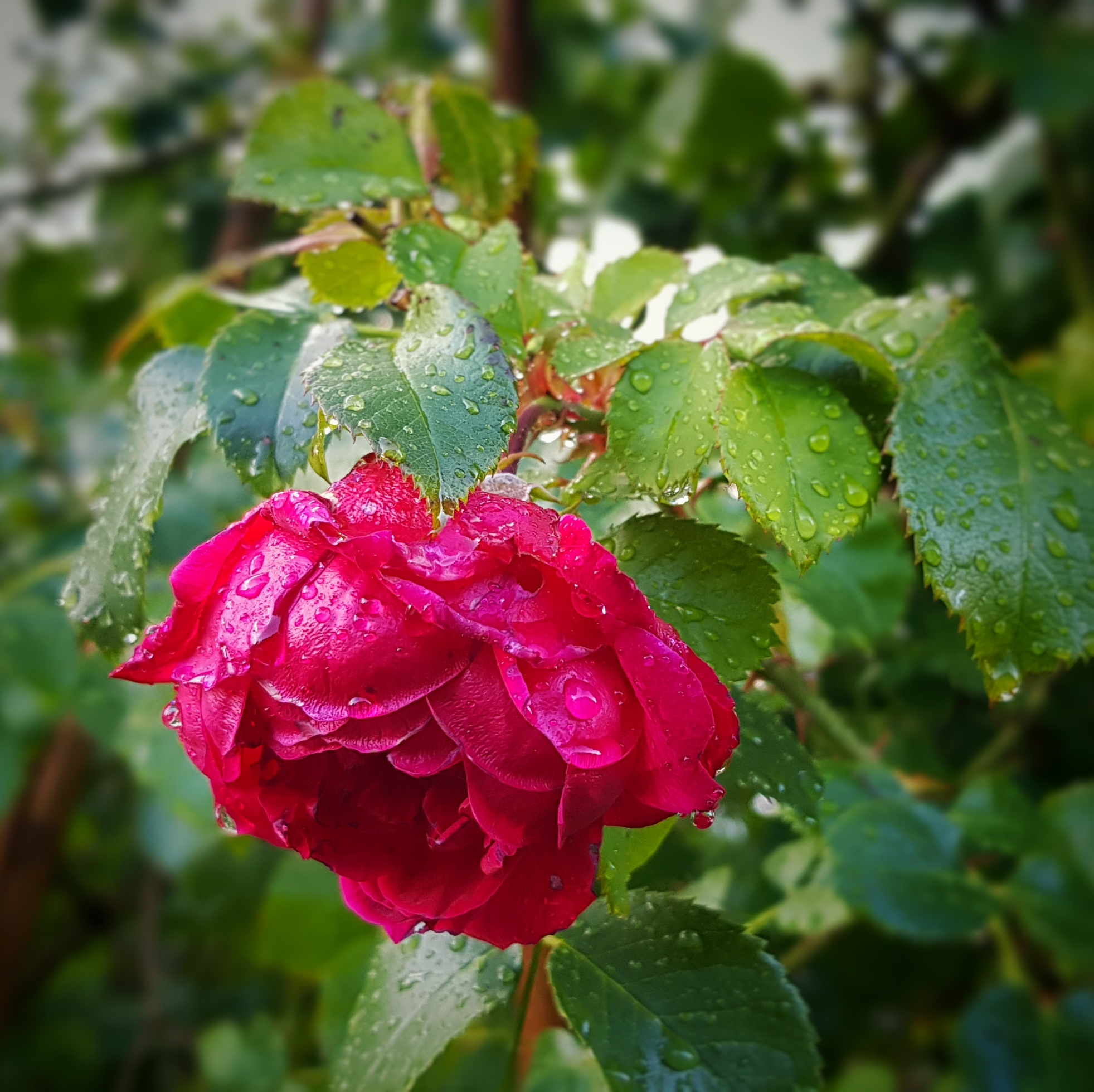 Day 237 - August 25: After the rain