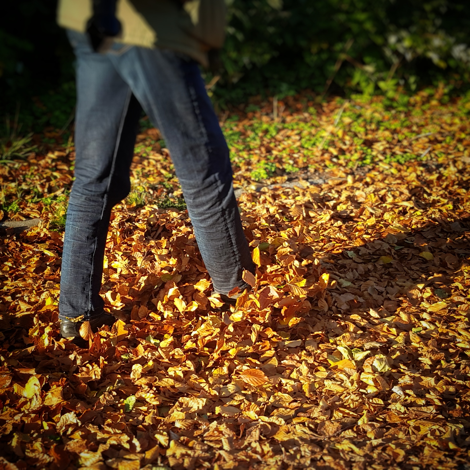 Day 297 - October 24: Fallen leaves