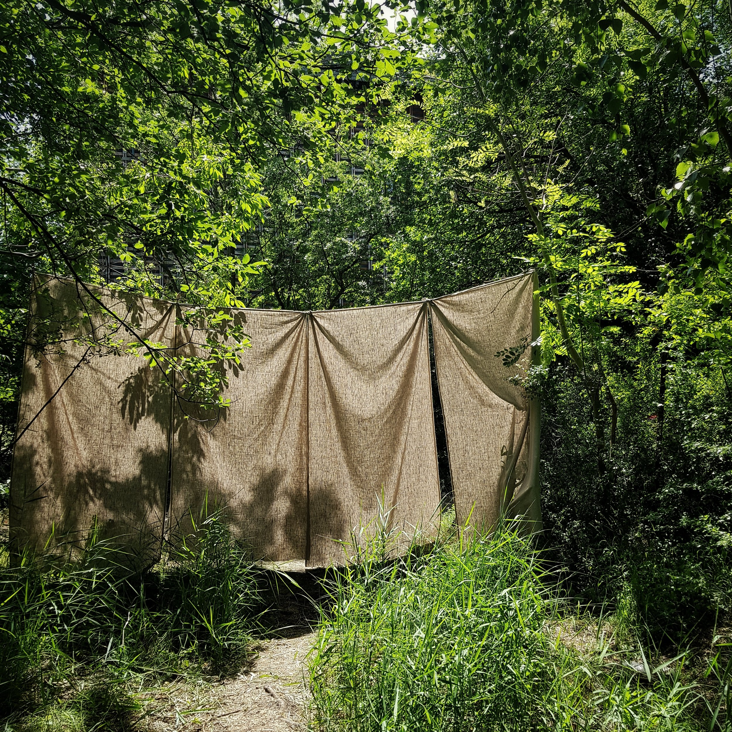 Day 160 - June 09: Drapes in the woods