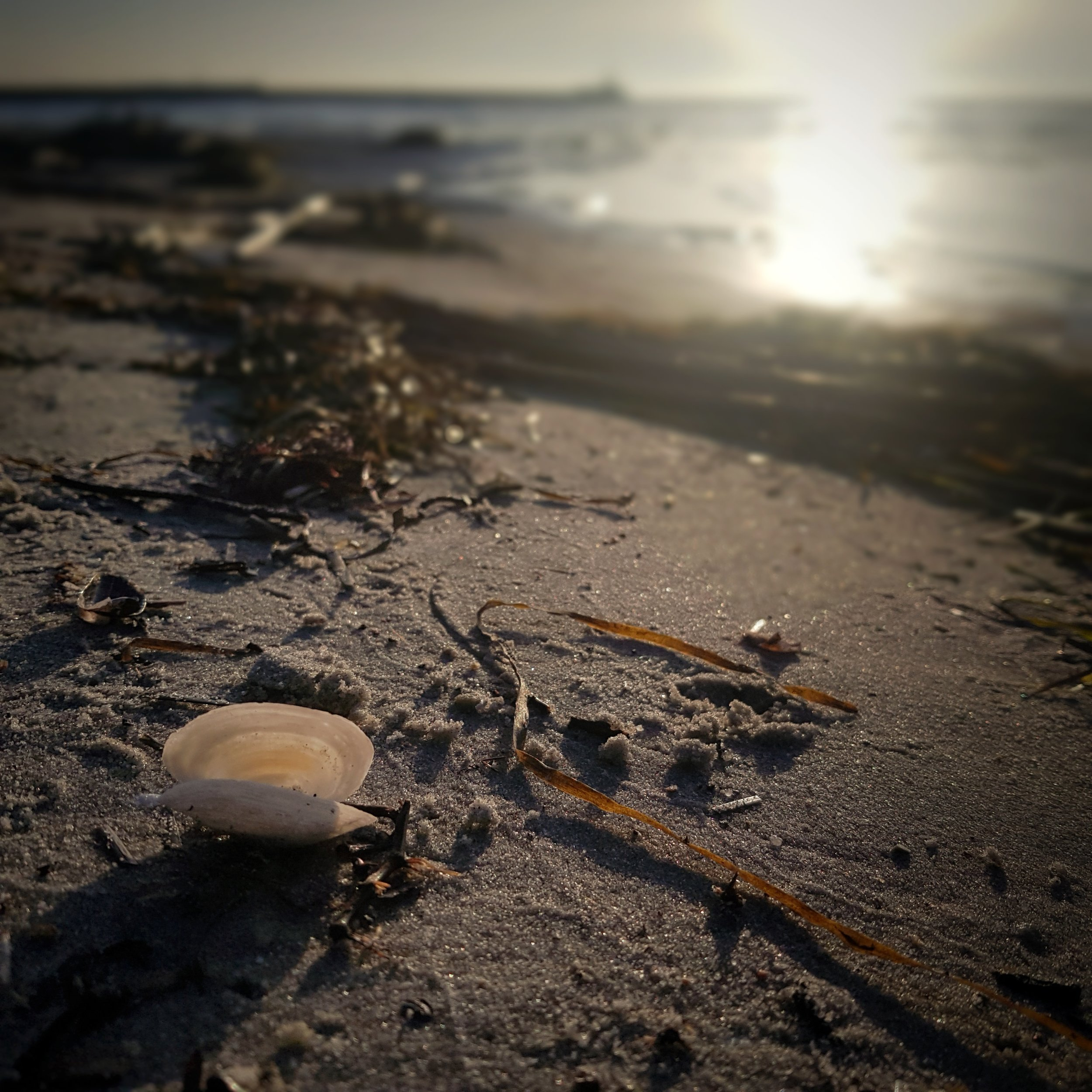 The 365 Project 2019: Day 46 - Seashell by the seashore