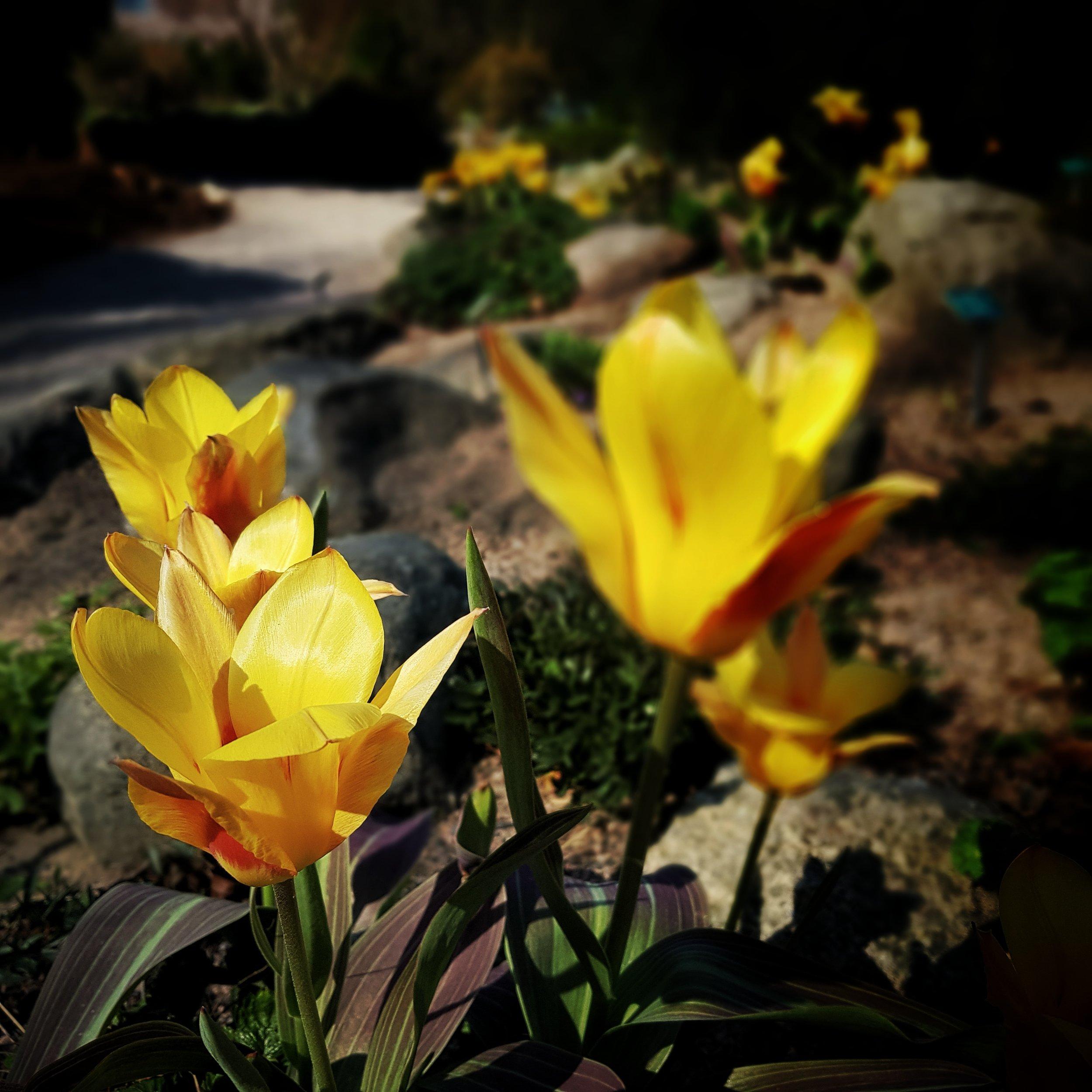 Day 114 - April 24: Yellow Petals