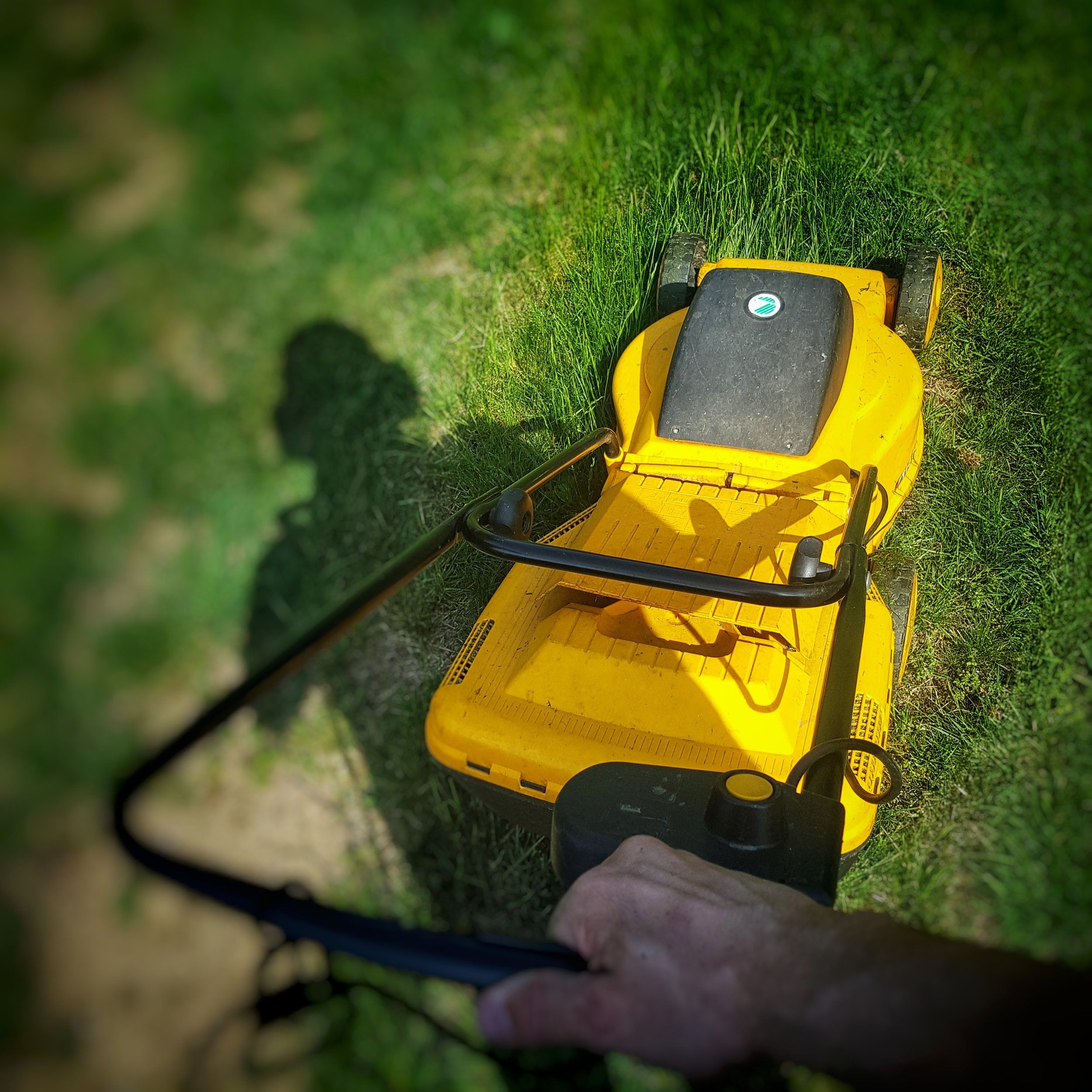 Day 143 - May 23: Mowing the meadow