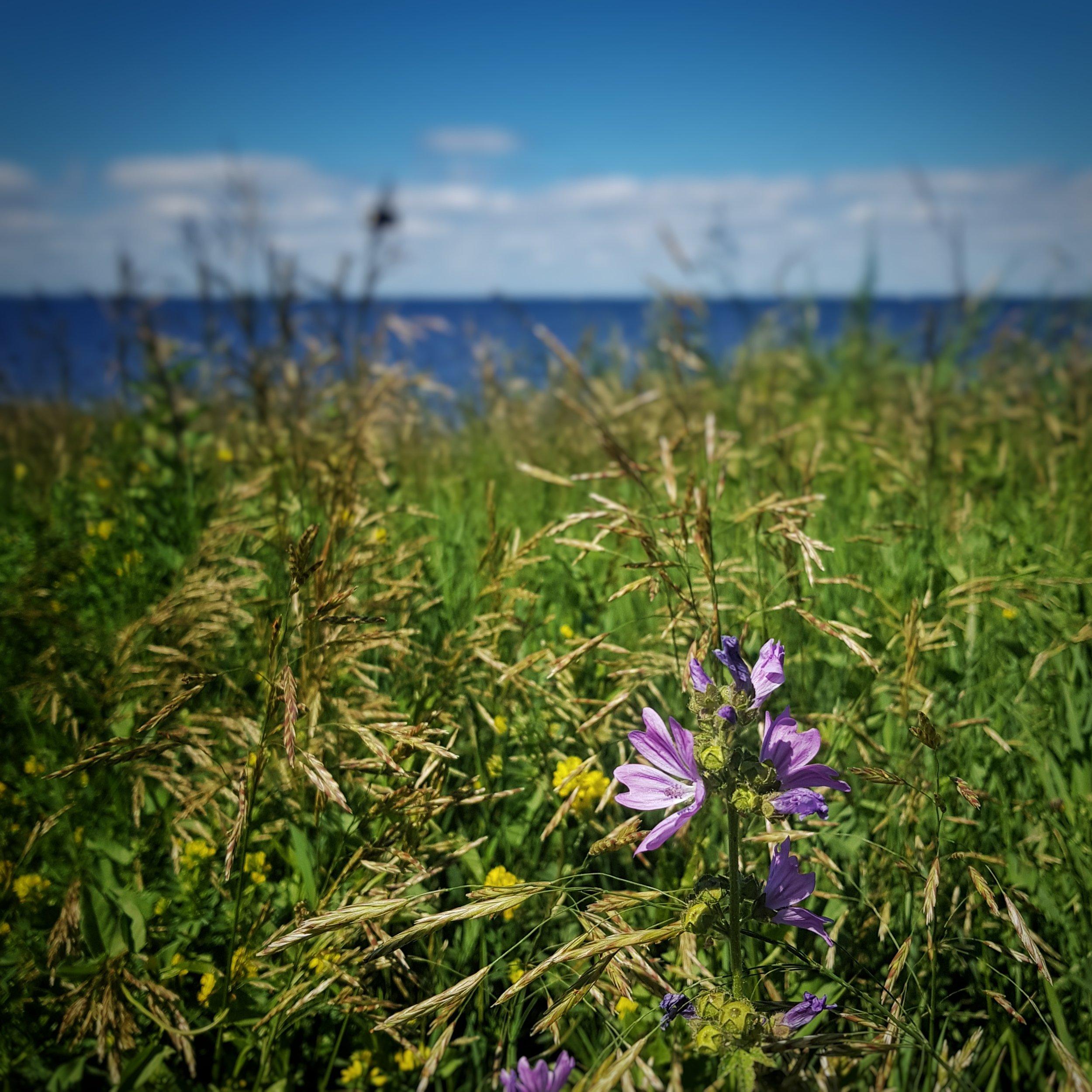 Day 173 - June 22: Purple Flower