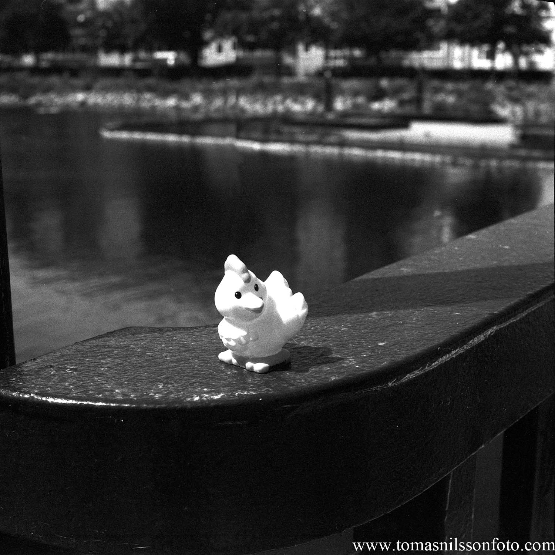 Day 182 - July 1: Little Birdie