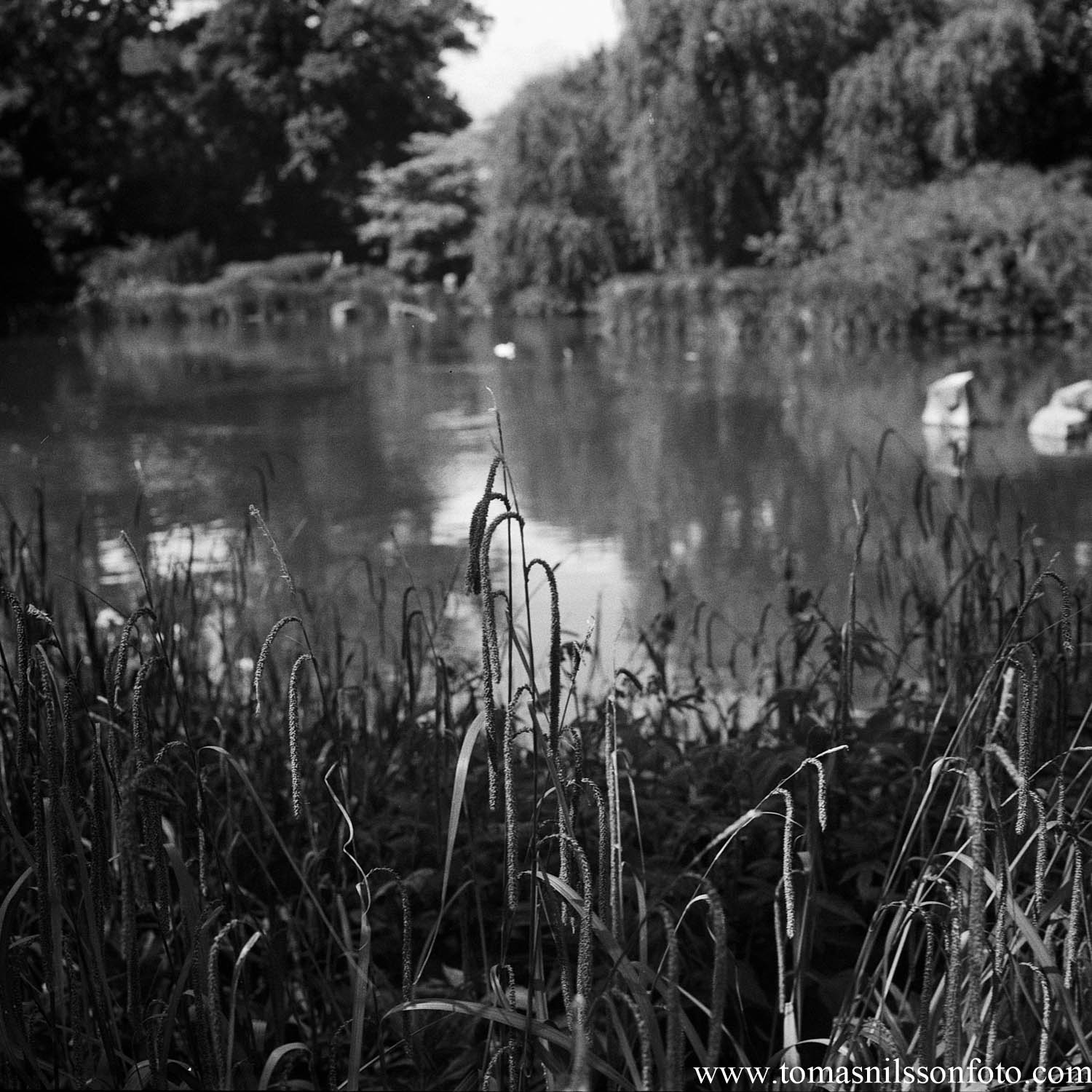 Day 195 - July 14: At the pond