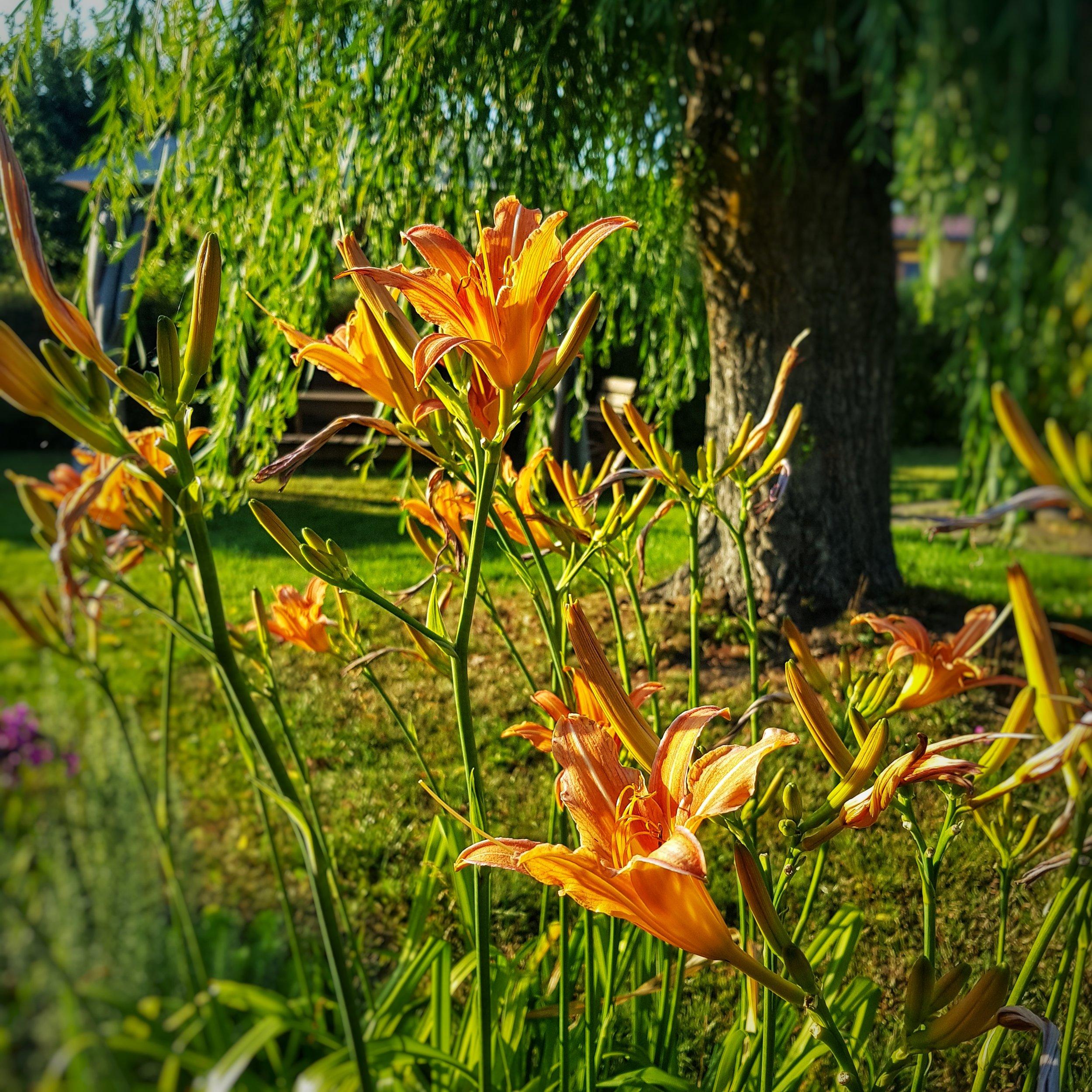 Day 207 - July 26: Flower Closeups