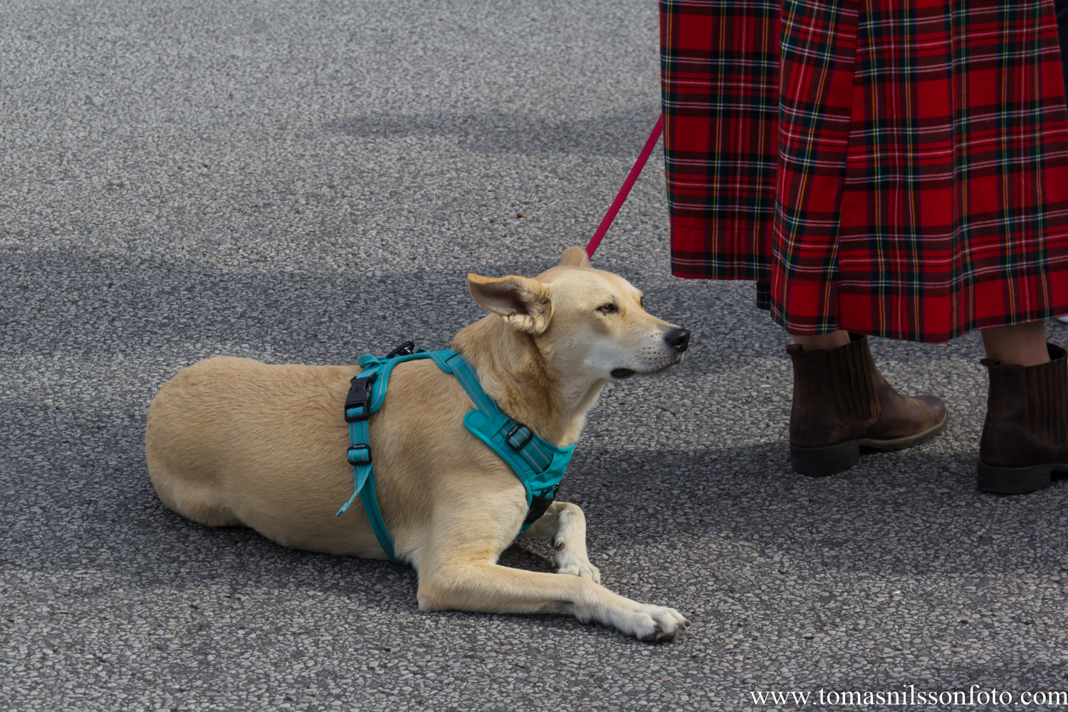 I've never been able to understand why you bring dogs with their sensitive hearing to loud events like this one. Boggles my blond brain cell! I saw several canines there who were very uncomfortable and jumpy with each drum beat blaring at them. :-(