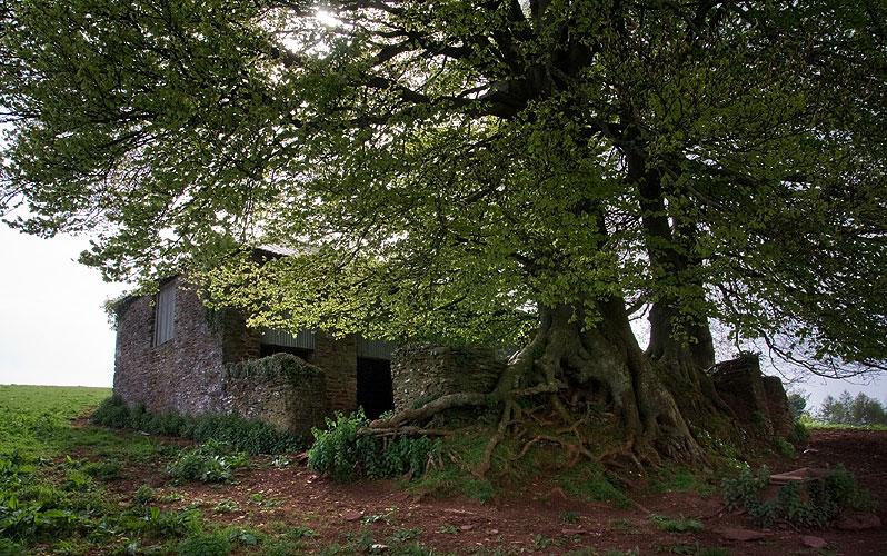 052_barn-trees.jpg