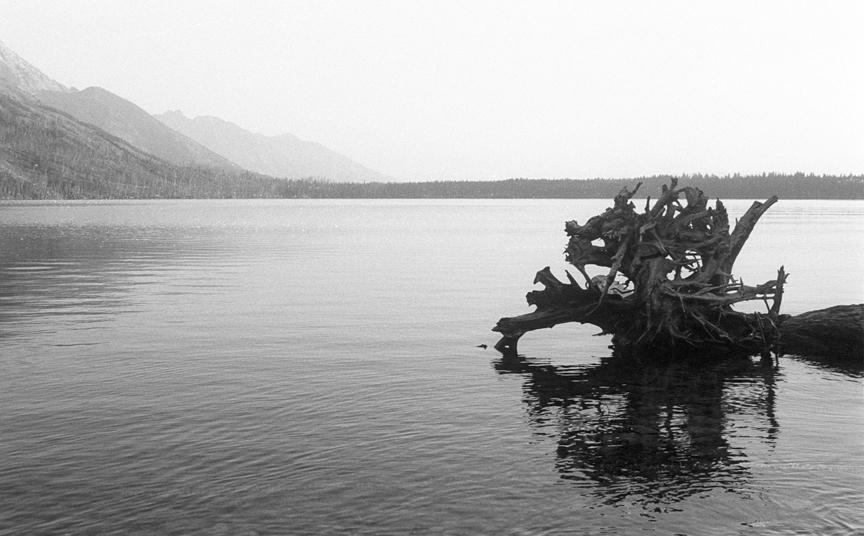 2-5 tree stump.jpg