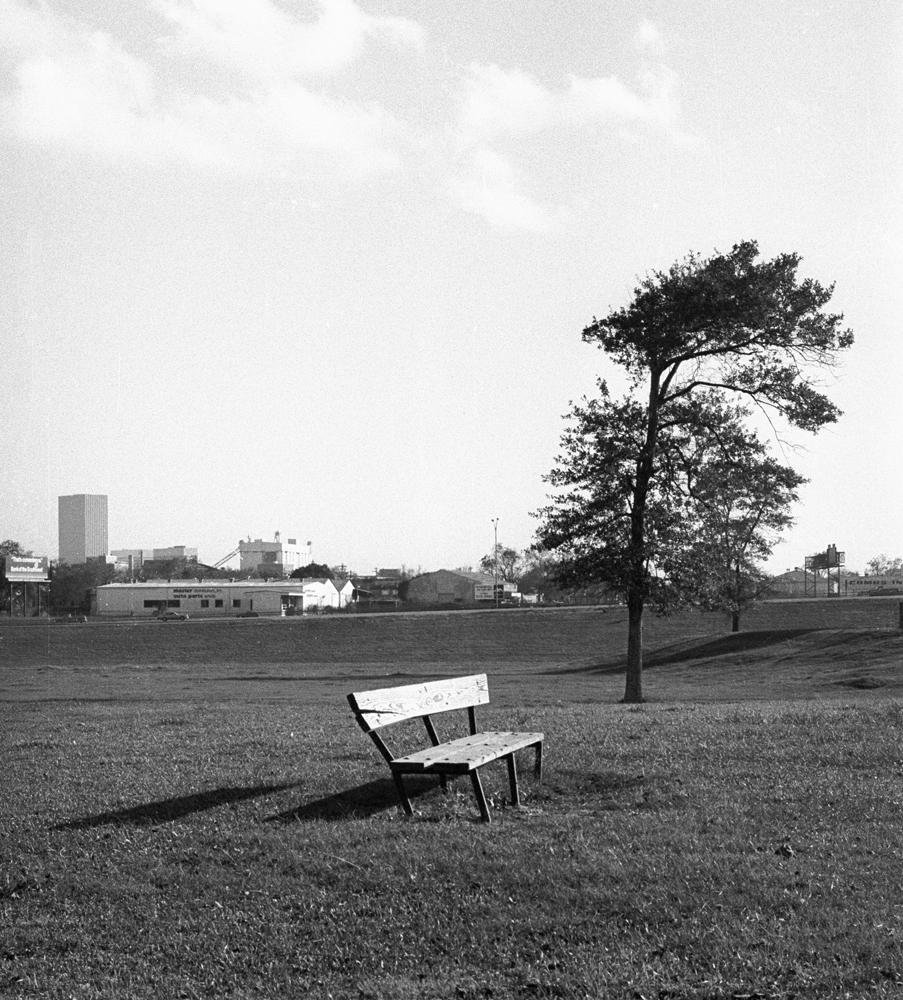 old-bench-w-tree alt print.jpg