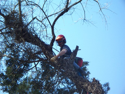 treecare.jpg