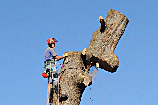 treecare_1 (2).jpg