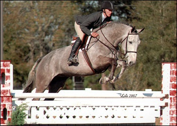 Thate - Pre green and junior hunter