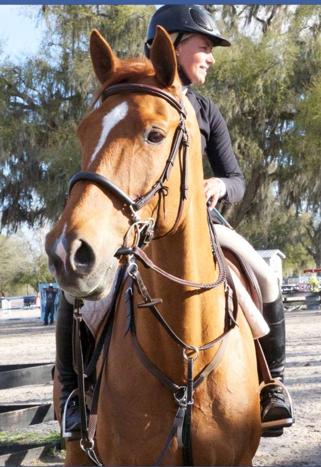 Gandor De Walput - Grand Prix Horse