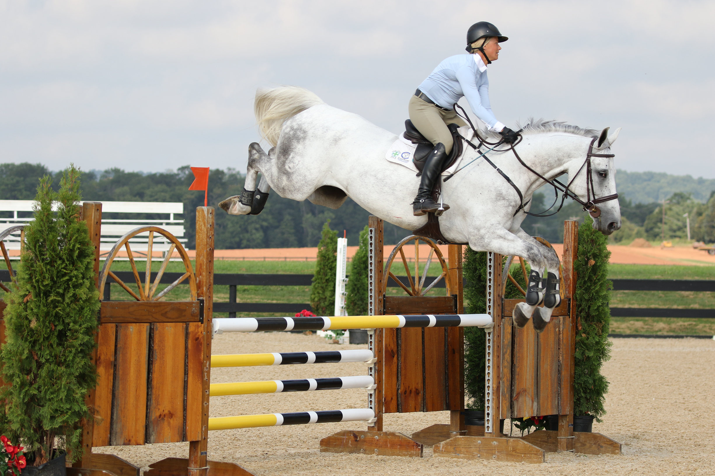 Antor Z - 2010 Zangersheide gelding: currently competing in 5 yr classes... Careful but easy.