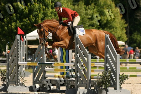 E VDL - 2009 Baloubet gelding out of Tinka's Boys' Dam. Very promising gelding for any division.  Currently jumping 7 yr classes.