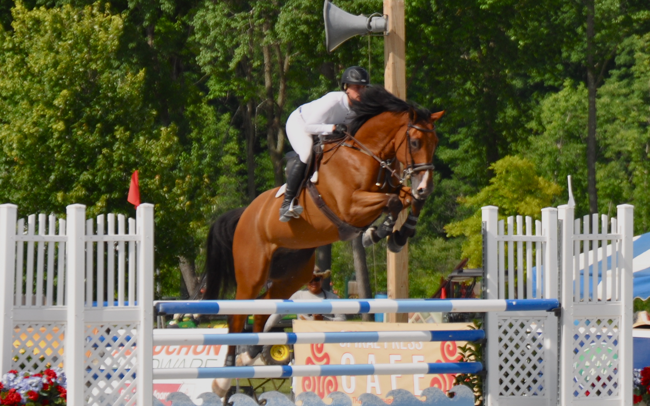 VDL Excel: 2009 Douglas x Quick Star KWPN gelding Grand Prix potential. Currently competing in 1.40 and 7 year old Jumpers.