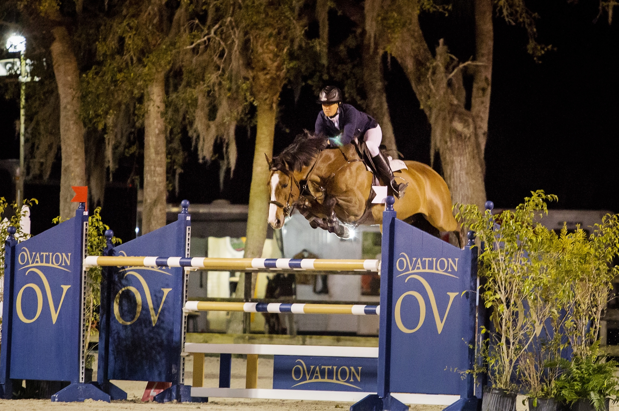 VDL Coverboy: 2007 KWPN gelding by Veron out of a Corland mare. Currently jumping Grand Prix.Champion first time doing 1.40m. Winner 5, 6, 7 year old classes as well as junior/amateur jumpers, ribbon winner multiple Grand Prix. Has also done equitation.