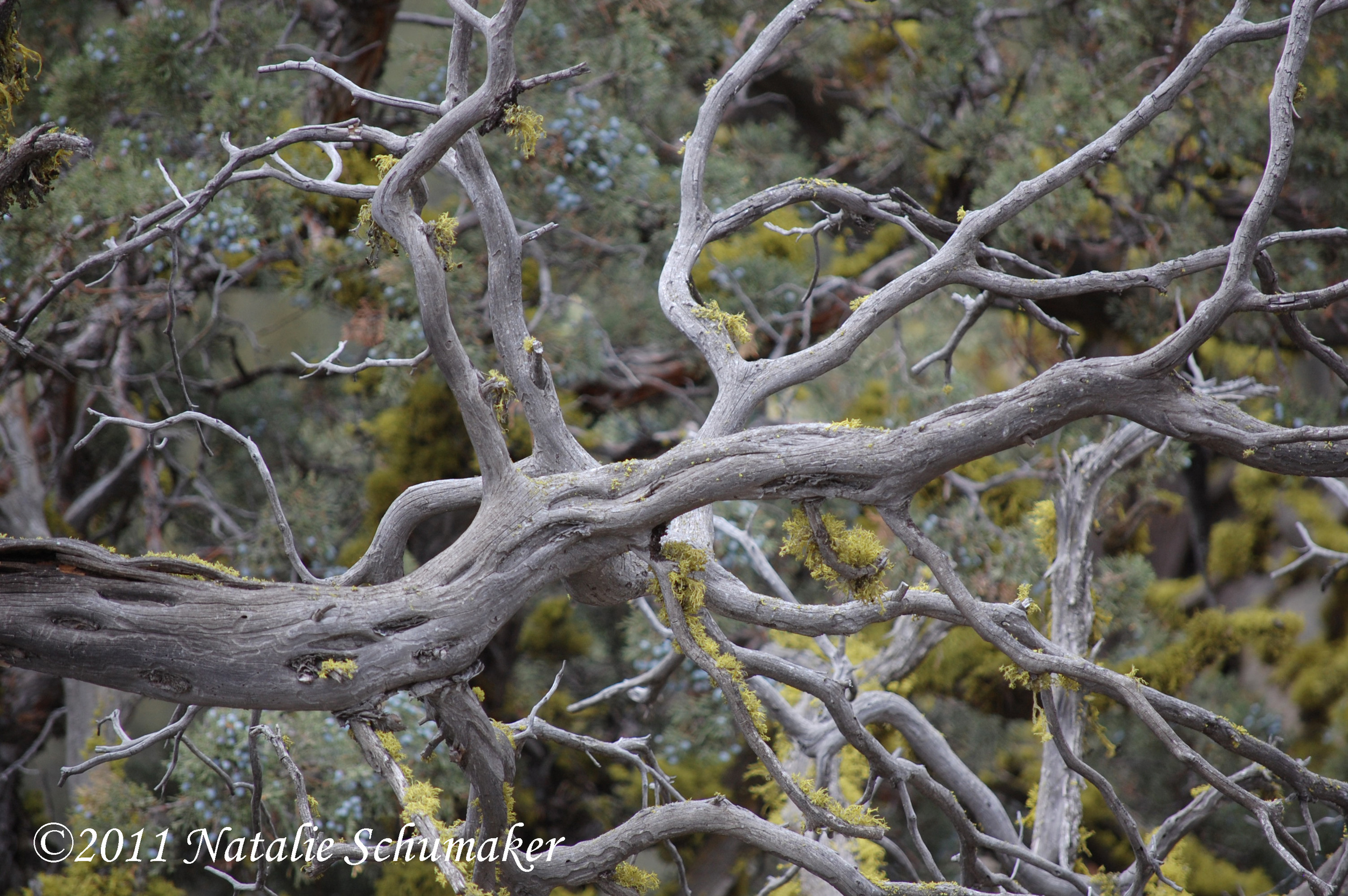 800x600        Bleached and gnarly branches show the high price of the wind and the rain. Out of the elements comes the beauty and refinement.