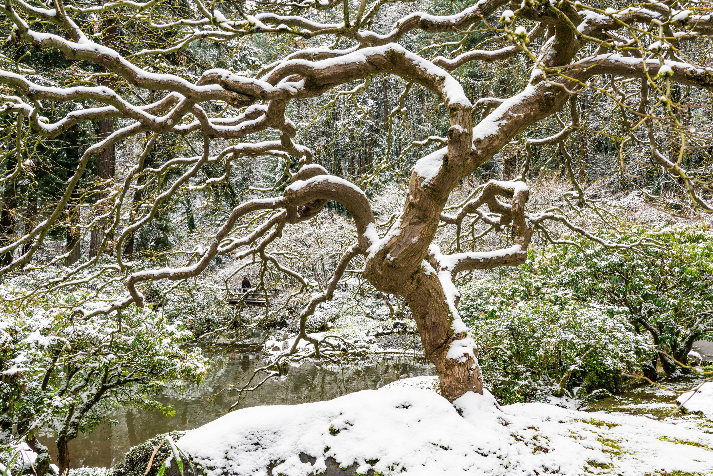 Portland Japanese Garden, Winter