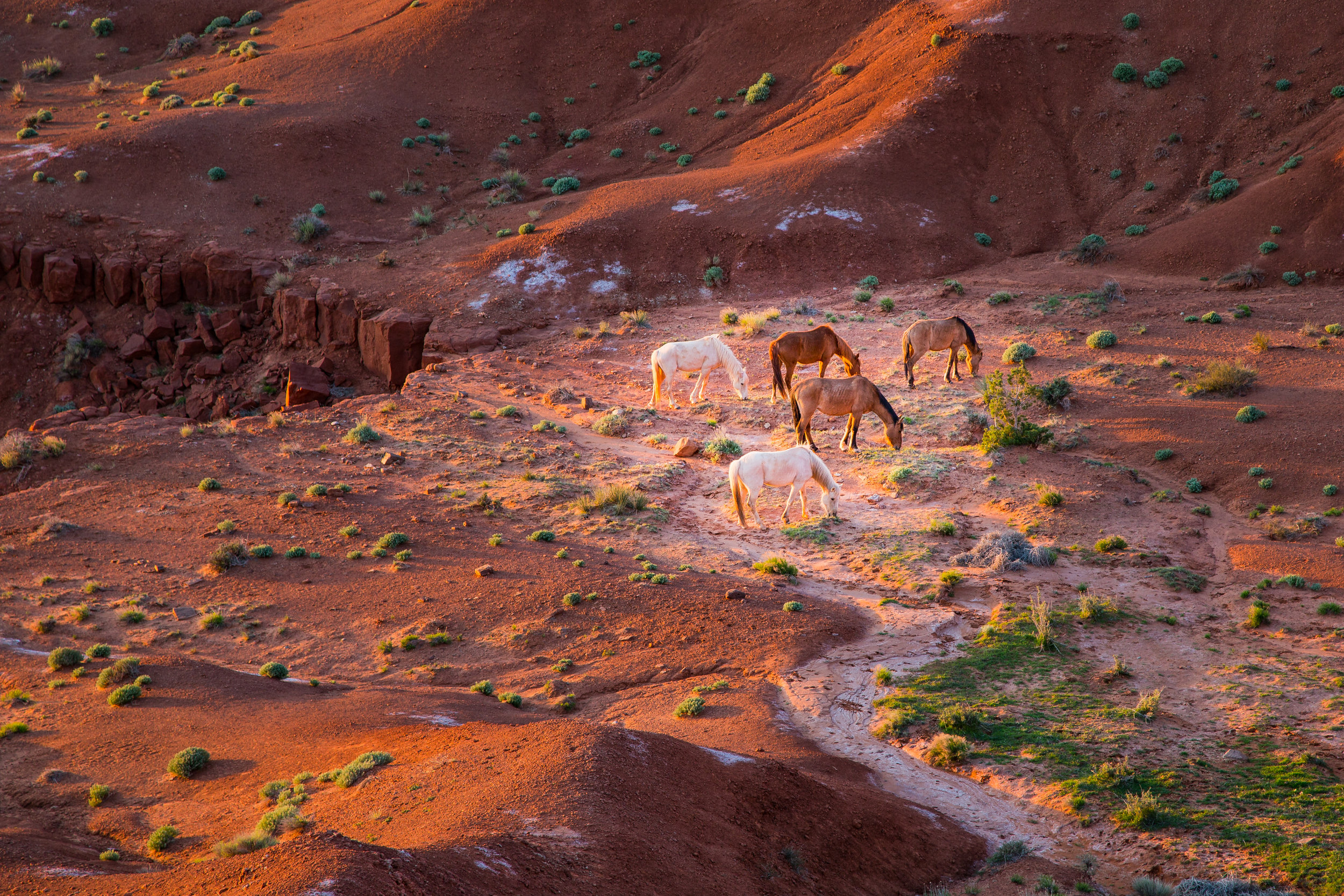 Wild Horses Early Morning, Monument Valley