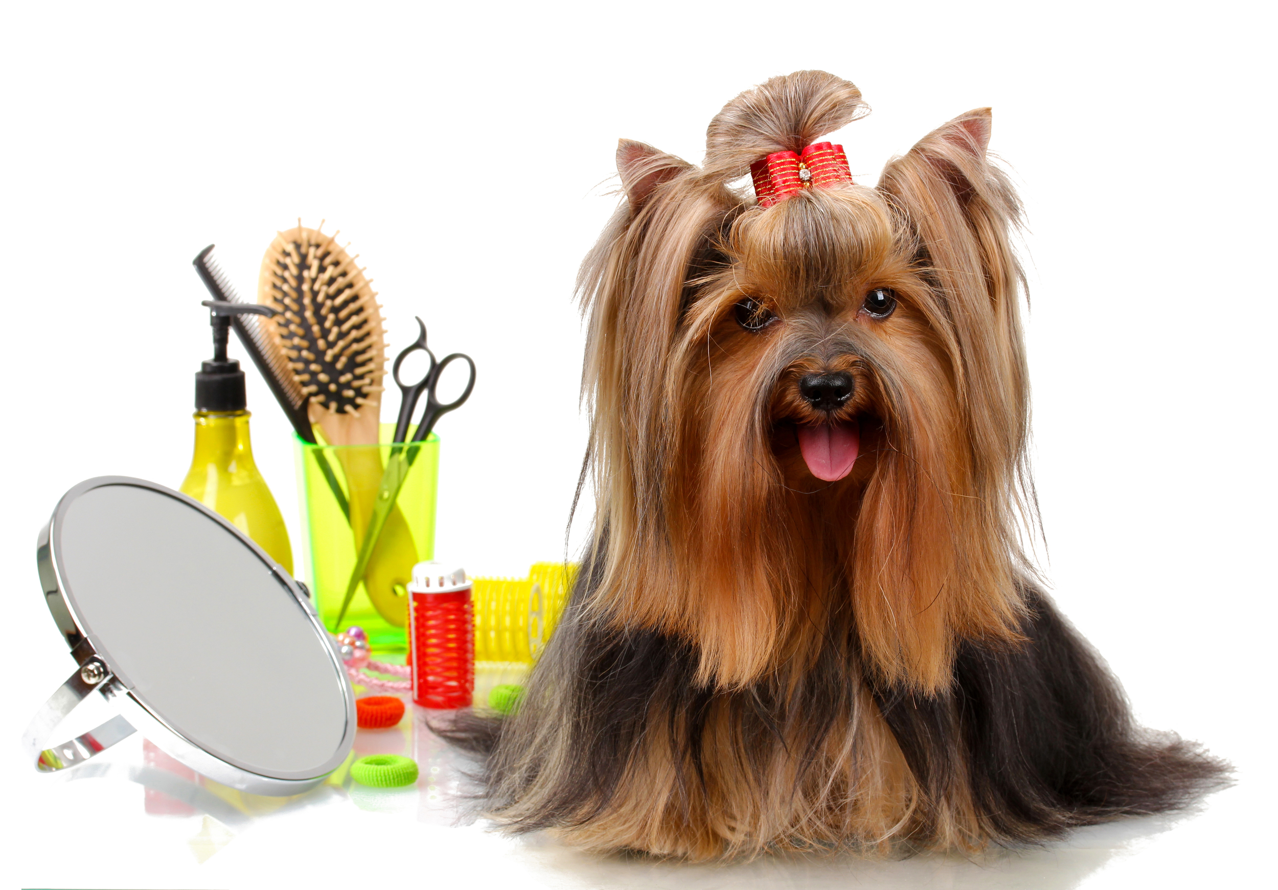 Click Here for Grooming Info