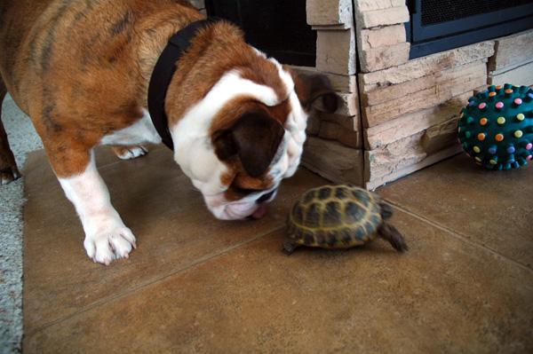 Tortoises smell delicious.