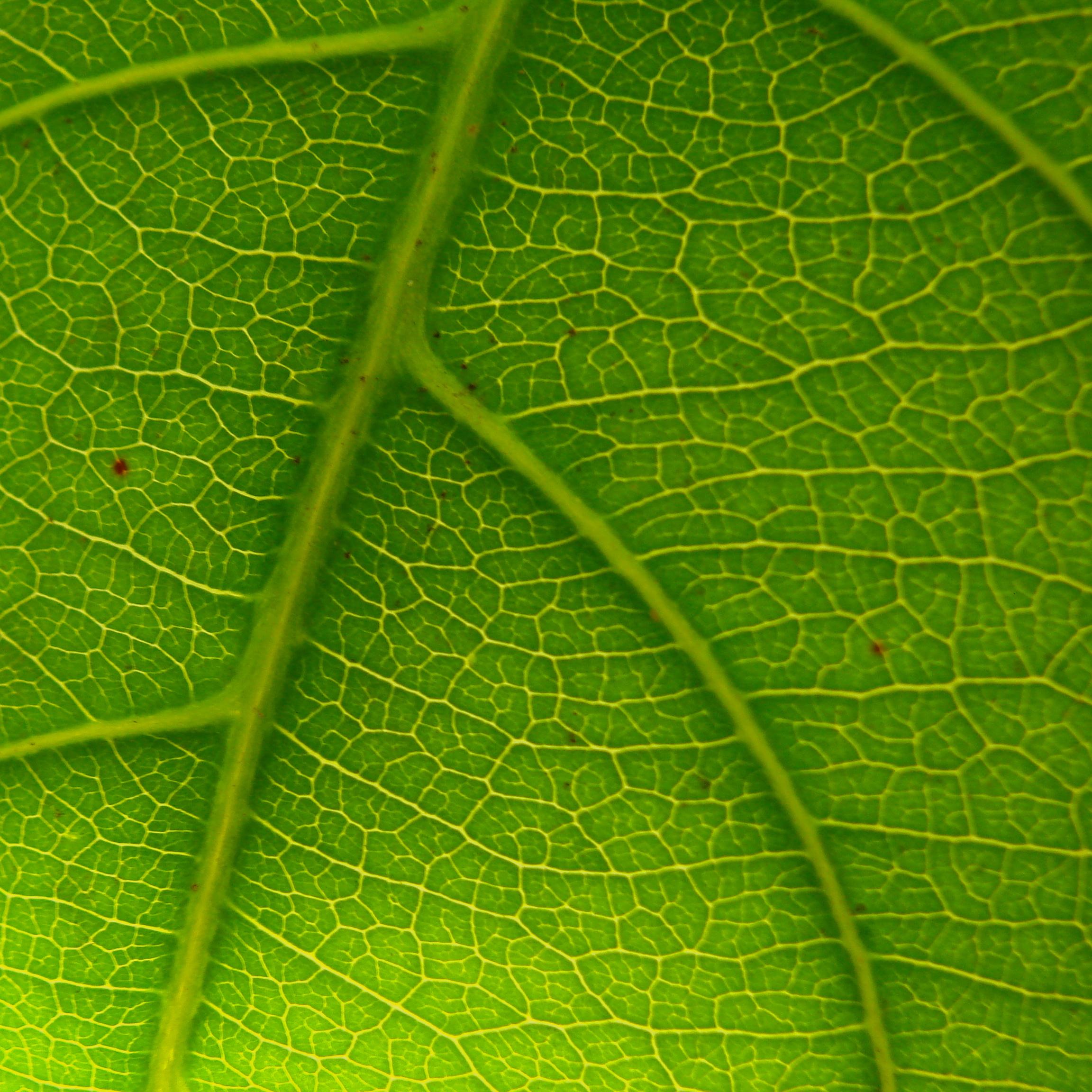 plant 1.JPG