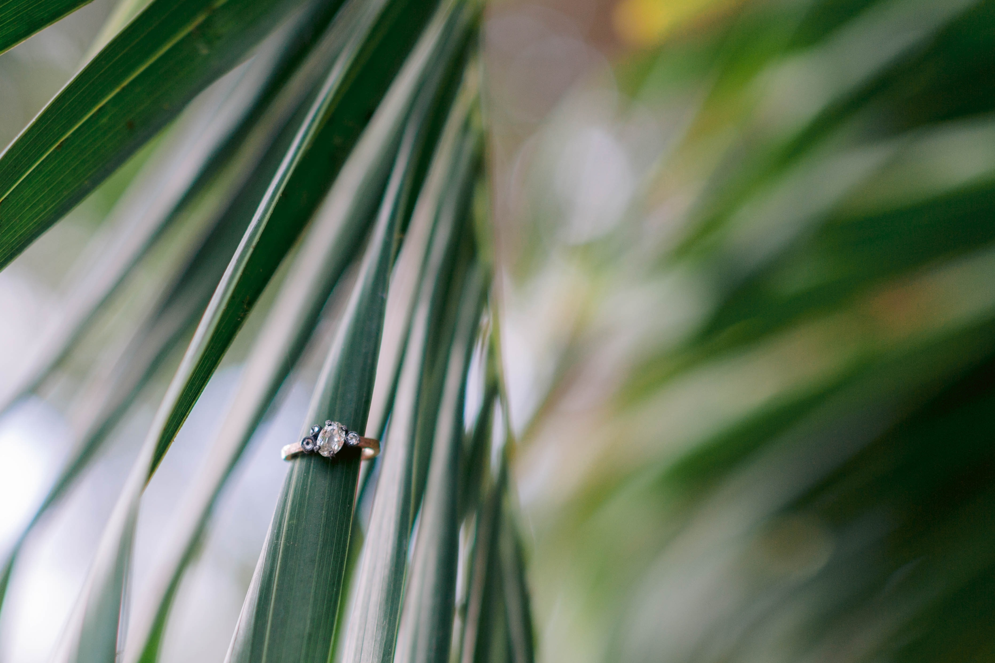 Engagement ring detail shot with a palm tree tropical Ana + Elijah - Wedding at Loulu Palm in Haleiwa, HI - Oahu Hawaii Wedding Photographer