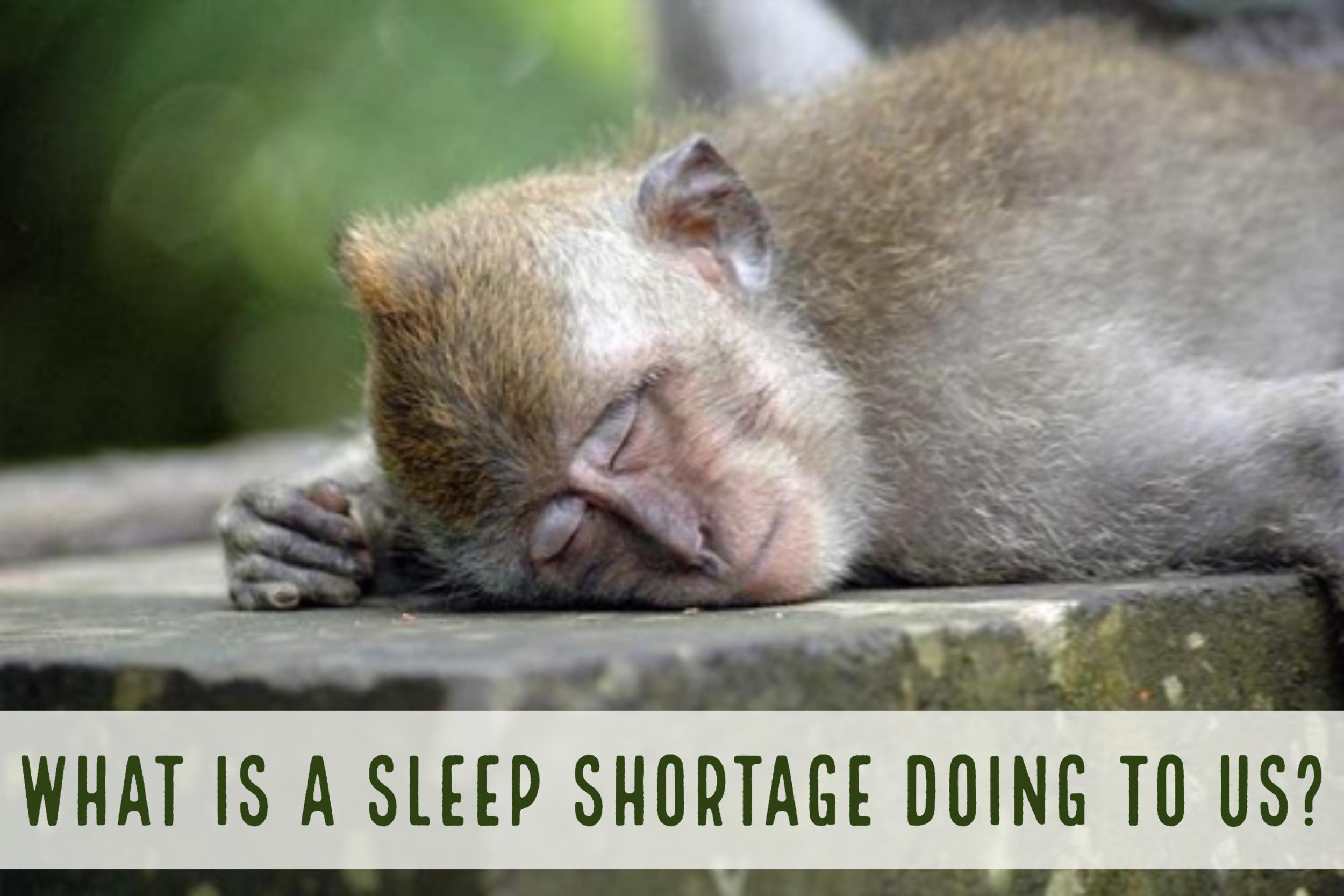 """sleepy_mk""    by    beccafrog    is licensed under    CC BY-SA 2.0"