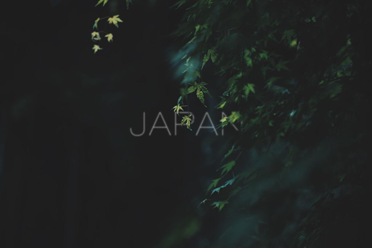 JAPAN 5-17 - 4 of 188.jpg