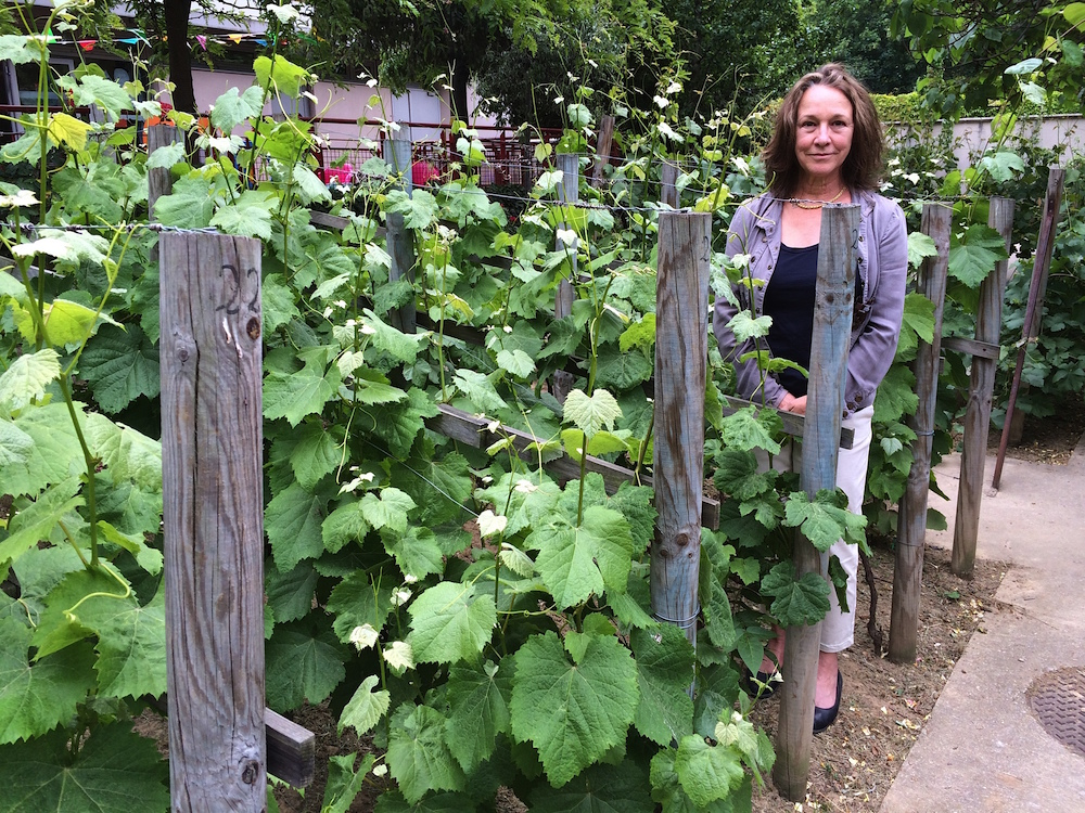 Translator Sally Pane visits little-known Montmartre vineyard.