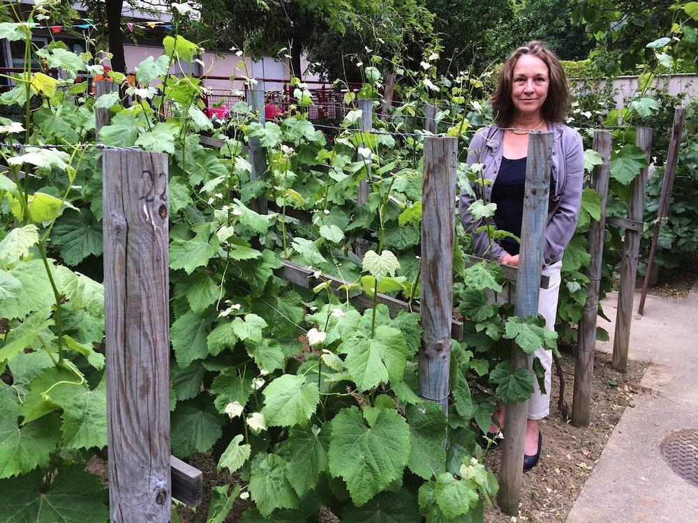 Translator Sally Pane visits little-known Montmartre vineyard.