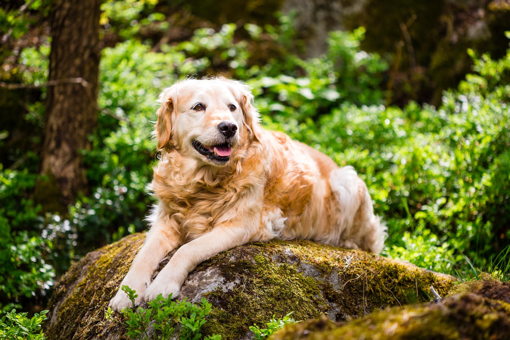 Tassa, my neighbours dog