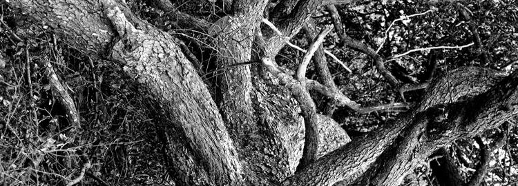 stock-photo-autumn-forest-sunbeams-211553368.jpg