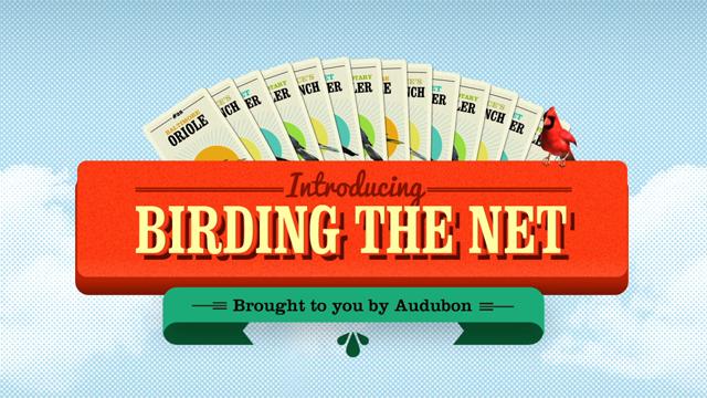 Birding the Net - National Audubon Society
